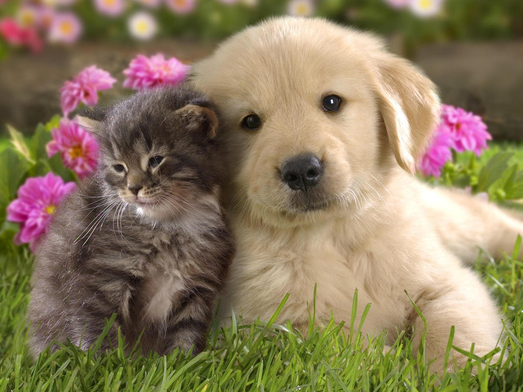 Pictures Of Puppies with a Cat 156.34 Kb