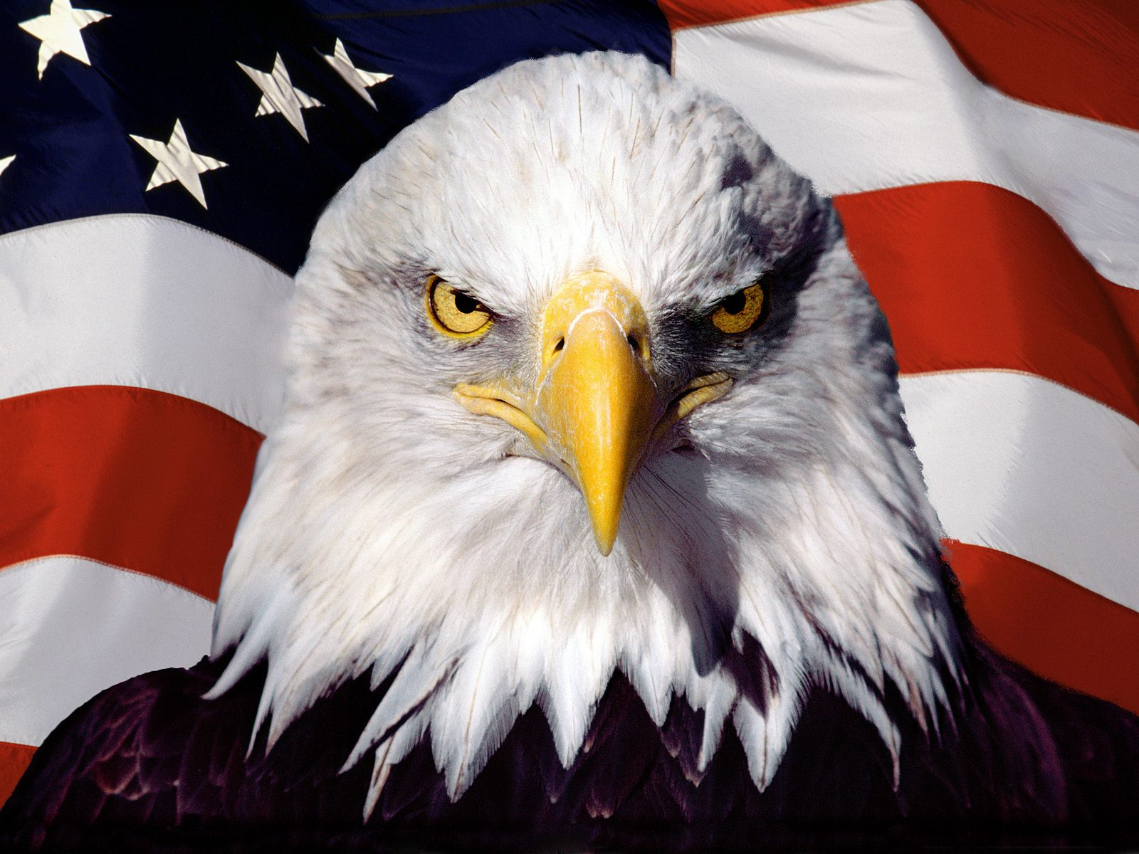 Symbol of America Eagle 726.51 Kb
