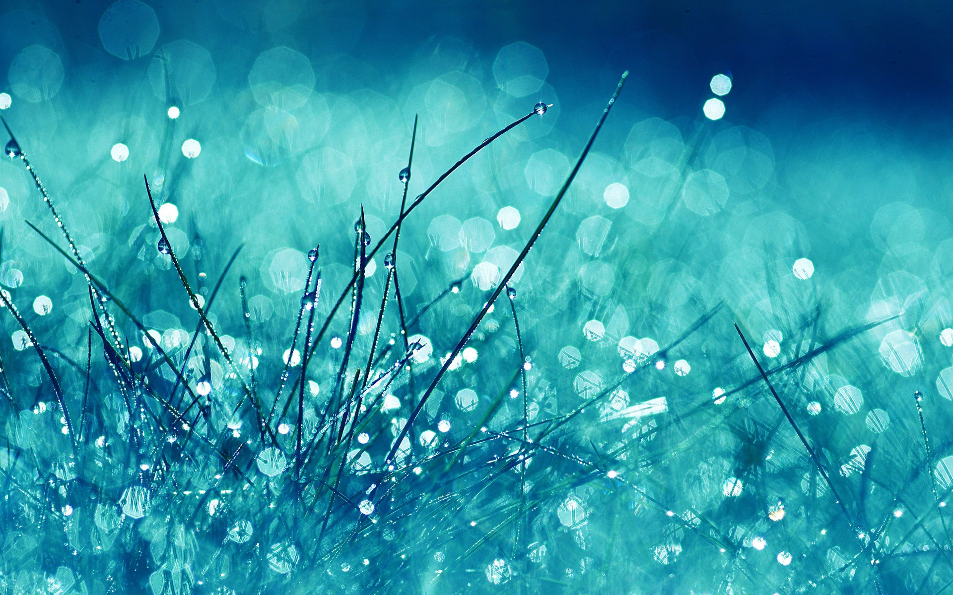 Dew Drops on the Grass Wallpaper HD 1023.1 Kb