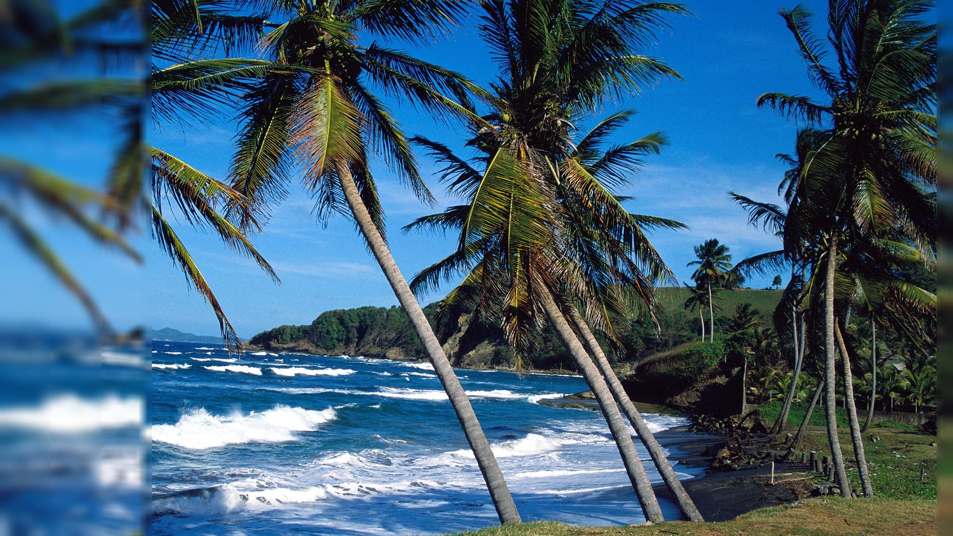 Palmtree Beach Free Wallpaper 83.26 Kb