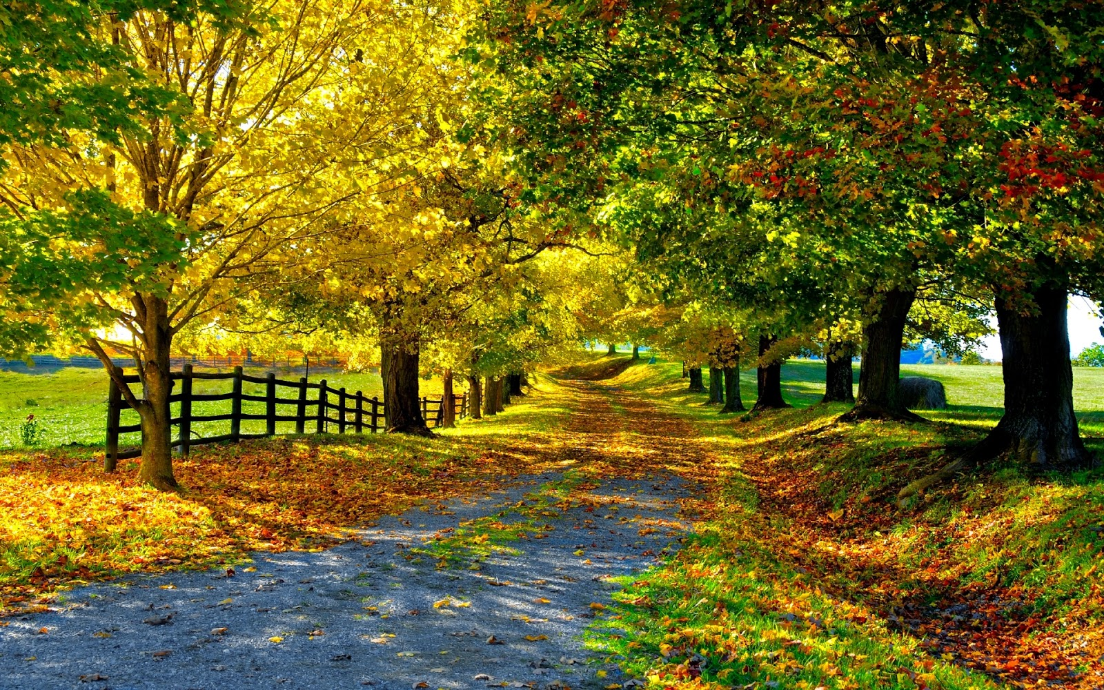 Autumn Sunny Day, Free Wallpaper
