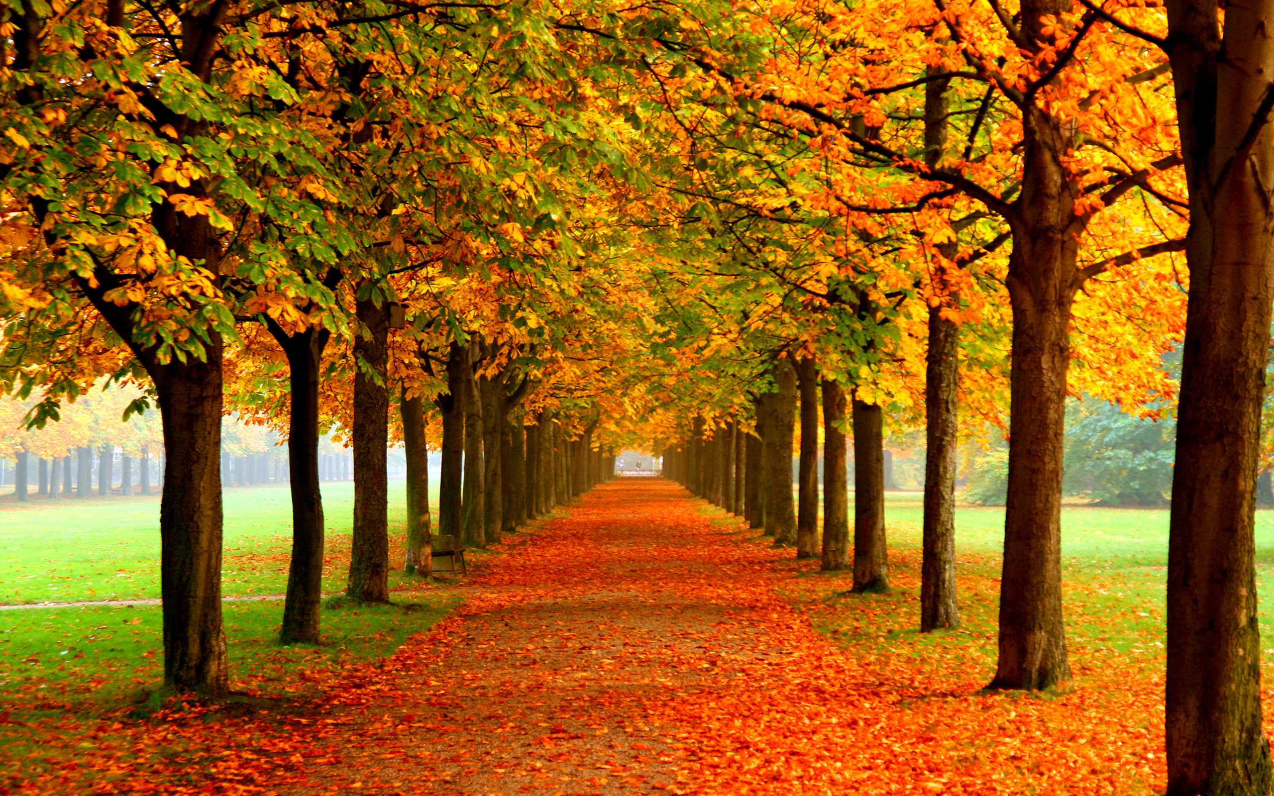autumn alley free wallpaper