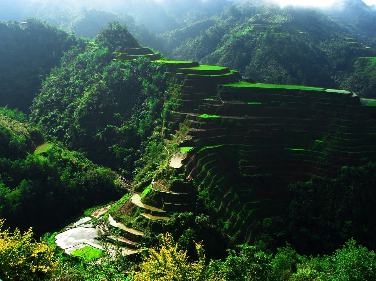 Green Terraces in Philippines 420.21 Kb