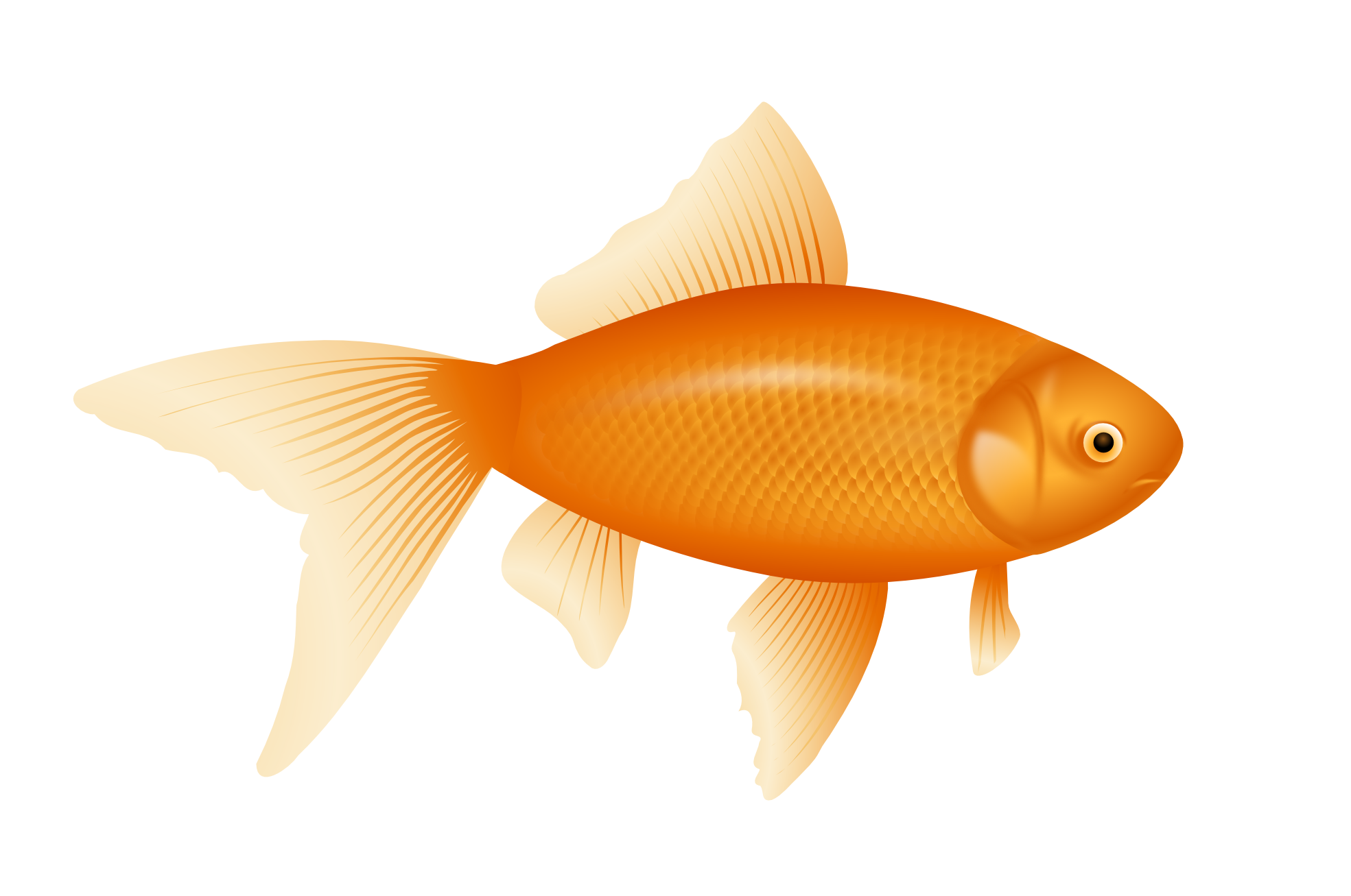 Orange Cartoon Fish 1446.56 Kb