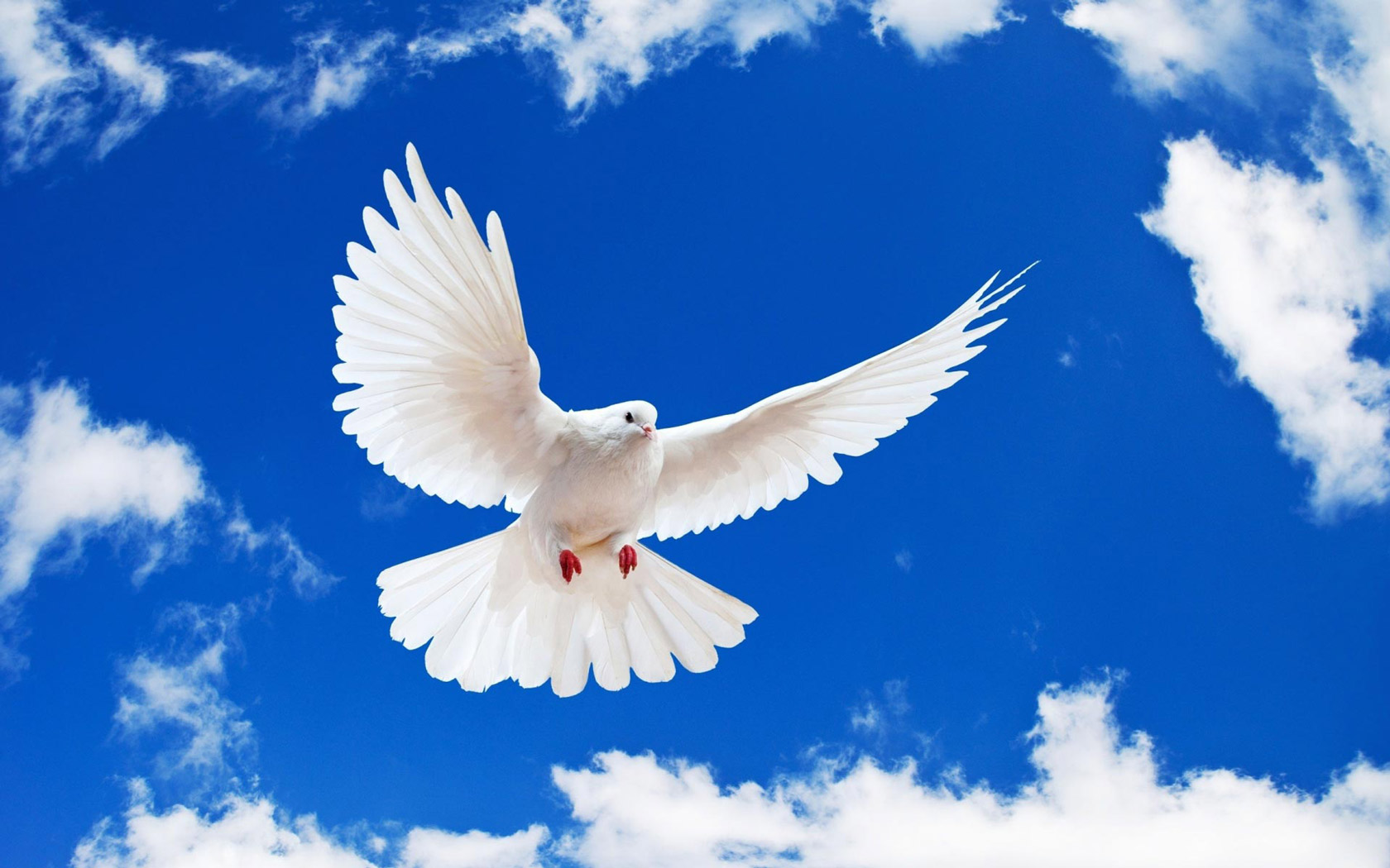 Dove Symbol of Peace 192.3 Kb