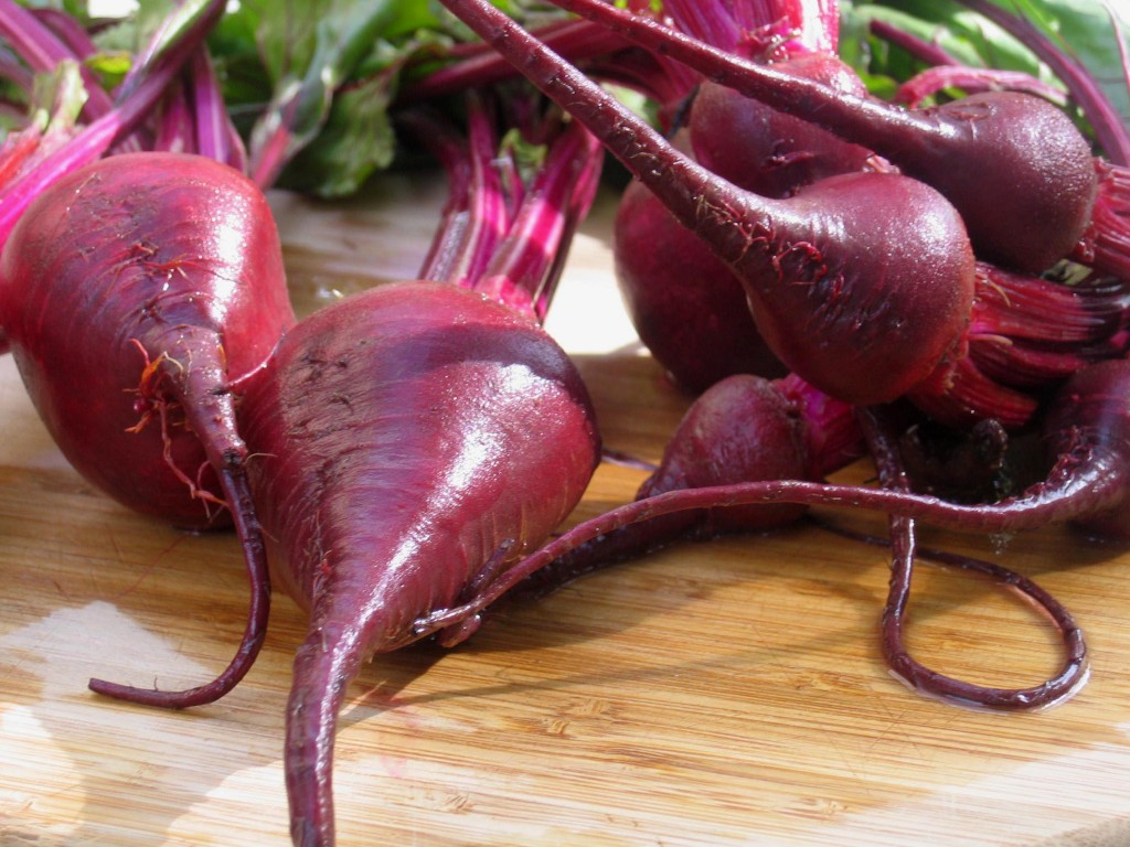 Edible Taproot Red Beet  275.74 Kb