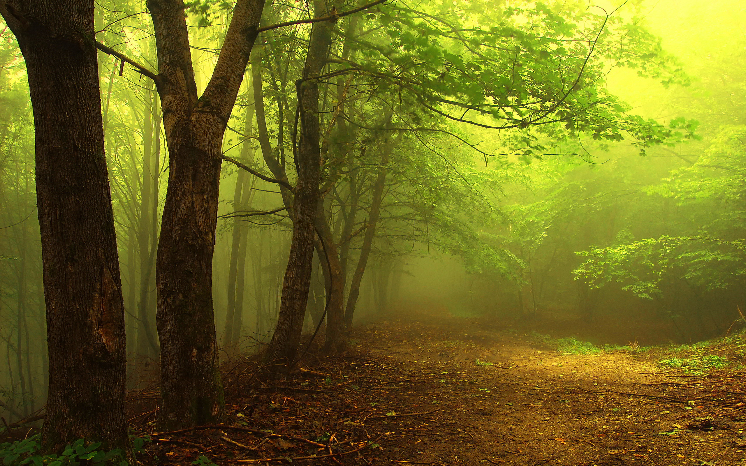 Mystical Forest Fog