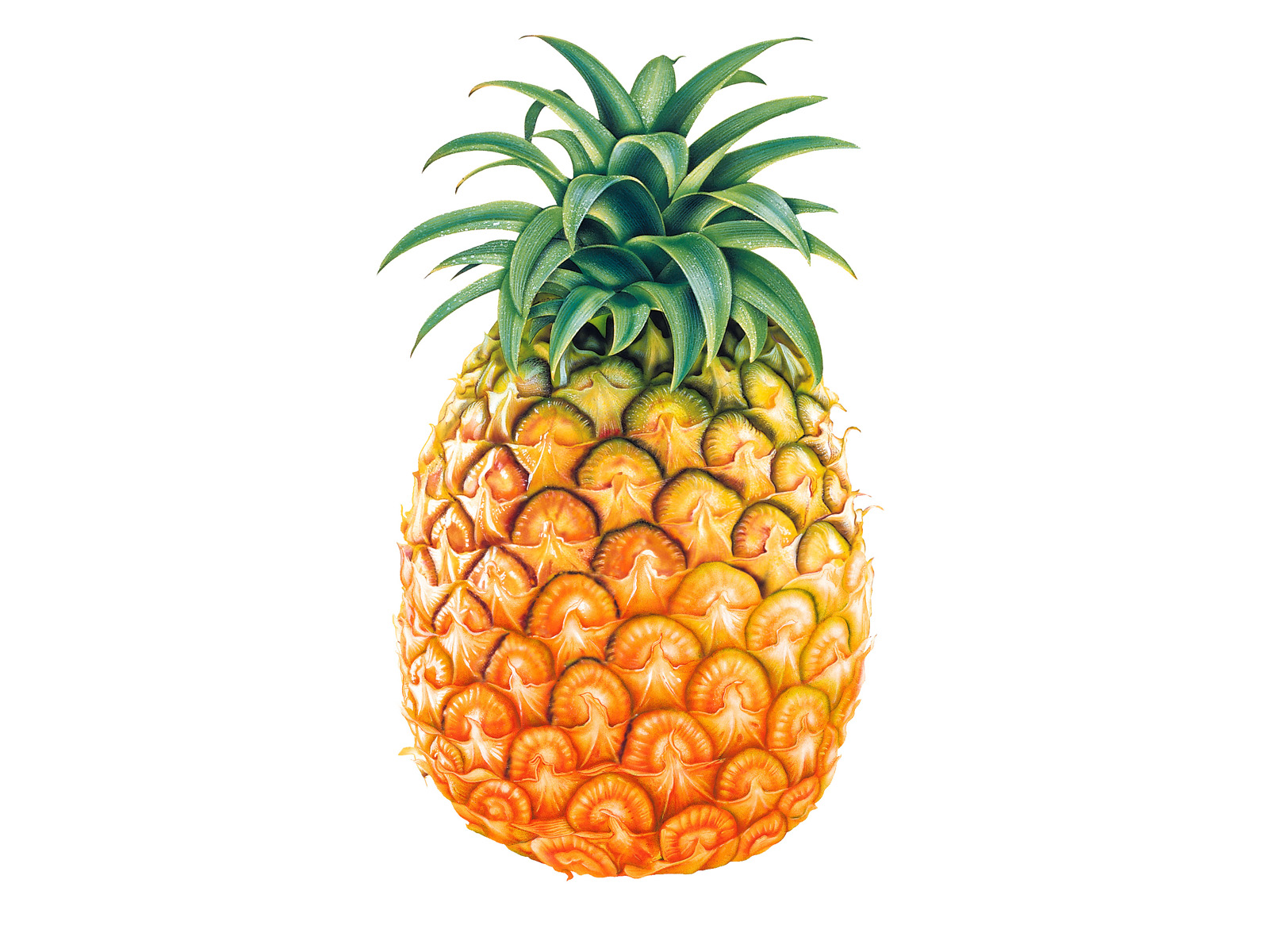 Pineapple Tropical Plant 454.27 Kb
