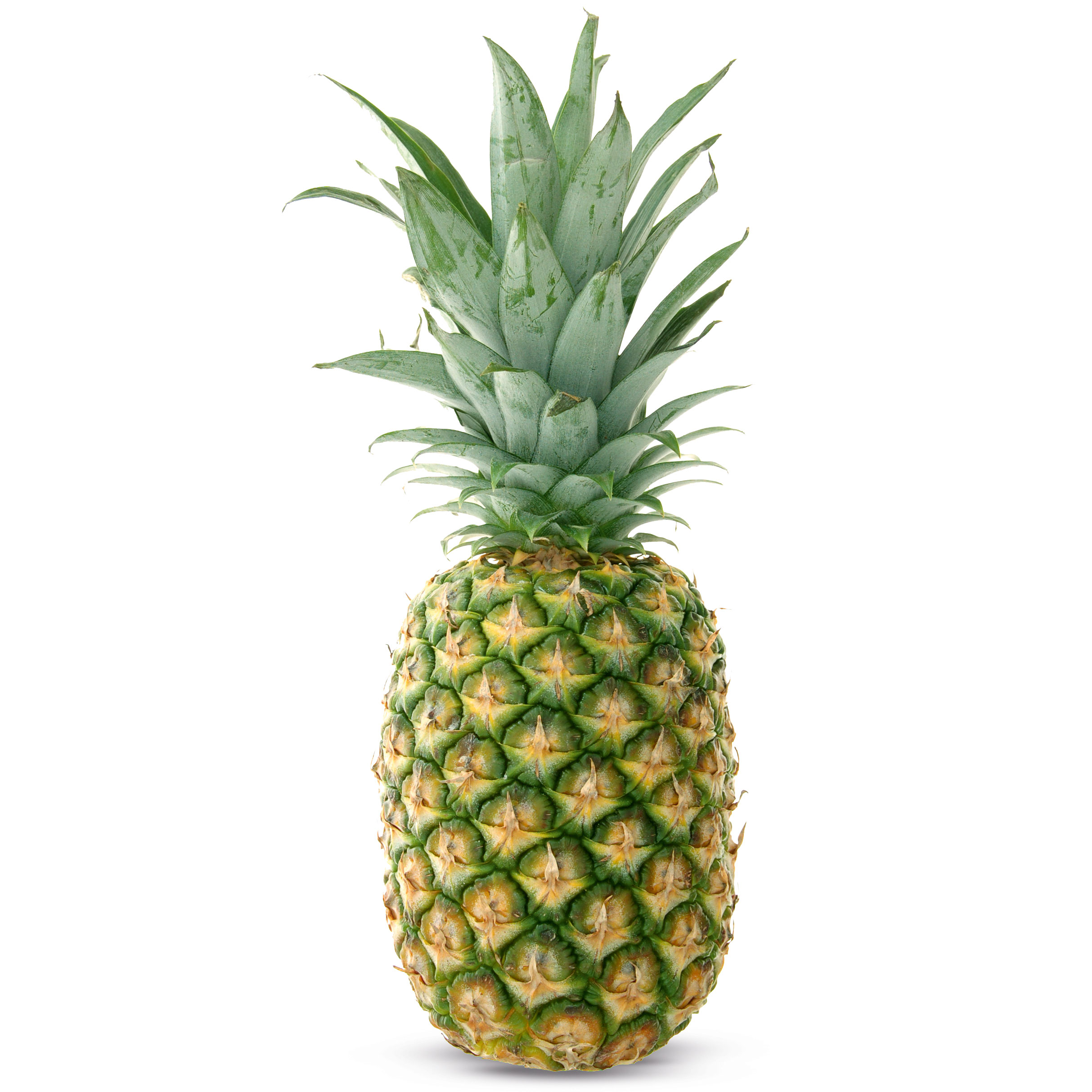 Pineapple Edible Multiple Fruit 454.27 Kb