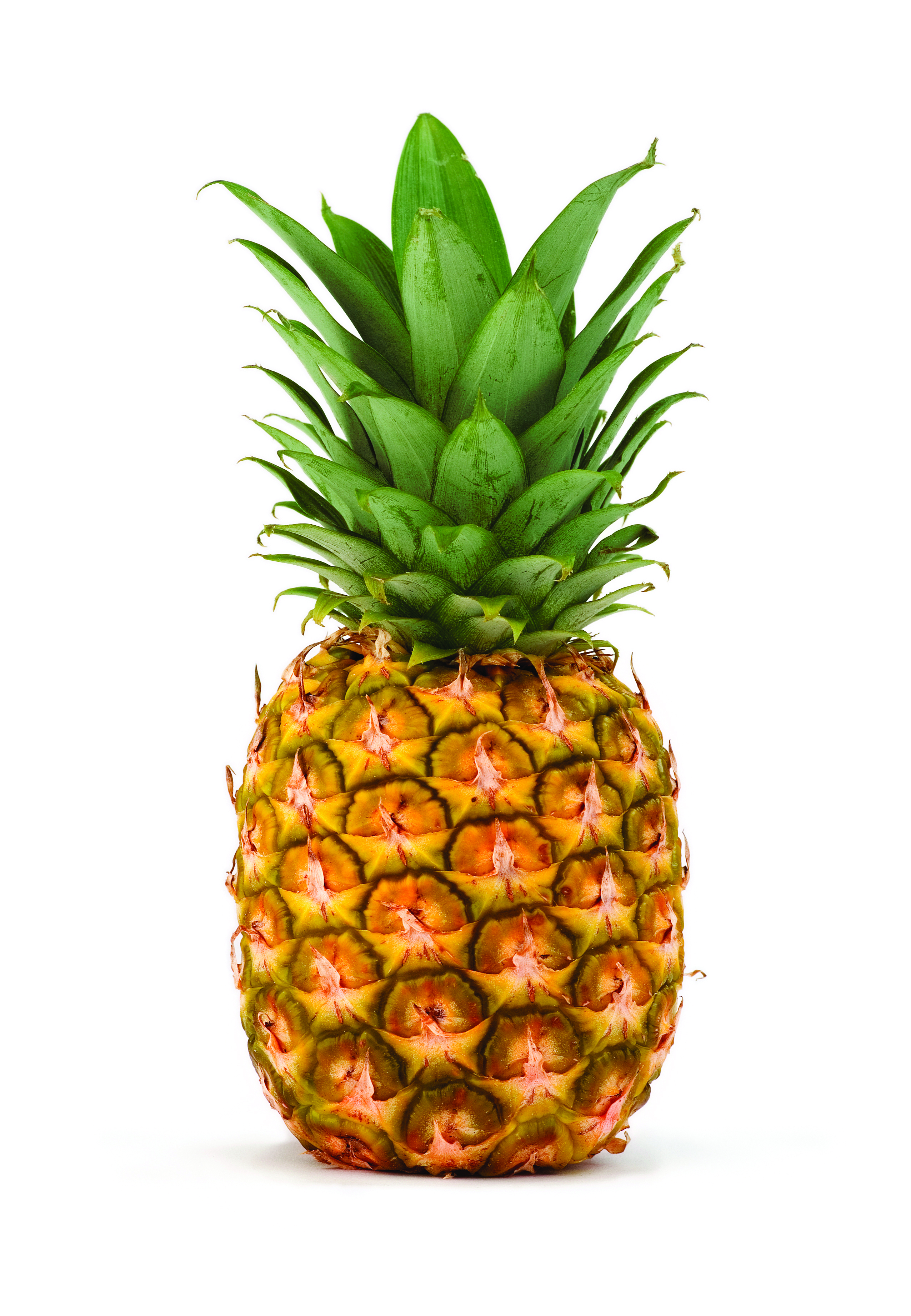 how to grow a fresh pineapple top
