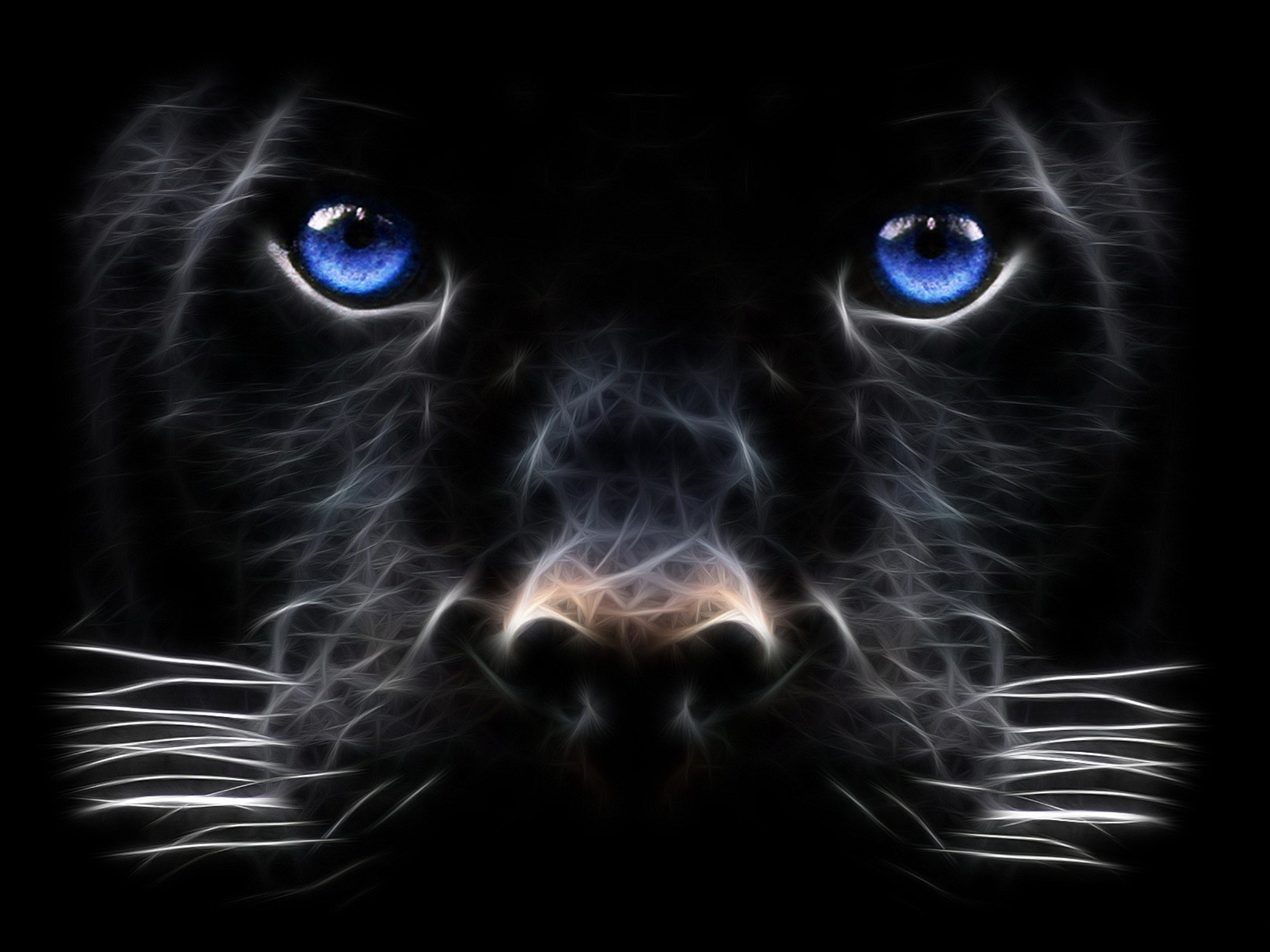 Panther Blue Eyes 285.38 Kb