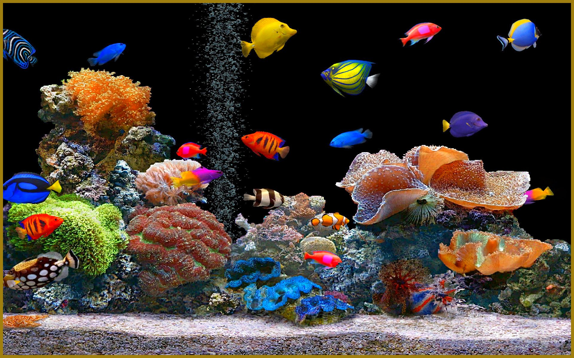 Aquarium Colorful Fish 872.38 Kb