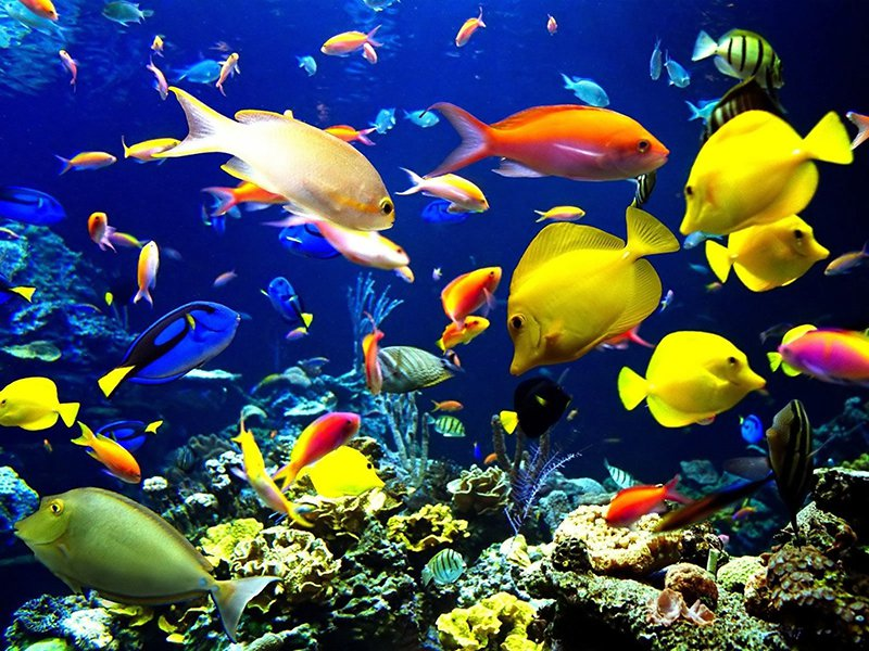 Many Types of Aquarium Fish