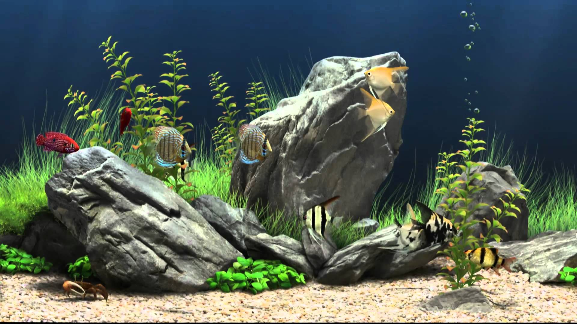 Aquarium Game Pattern
