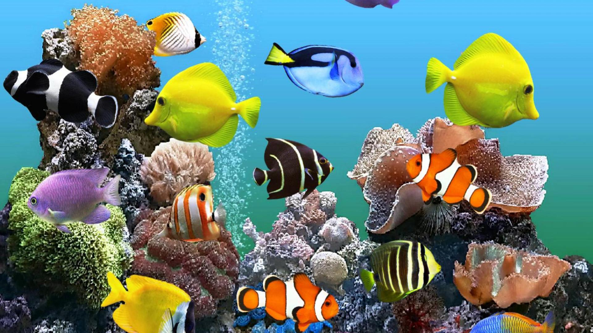 Diversity of Fish in Aquarium