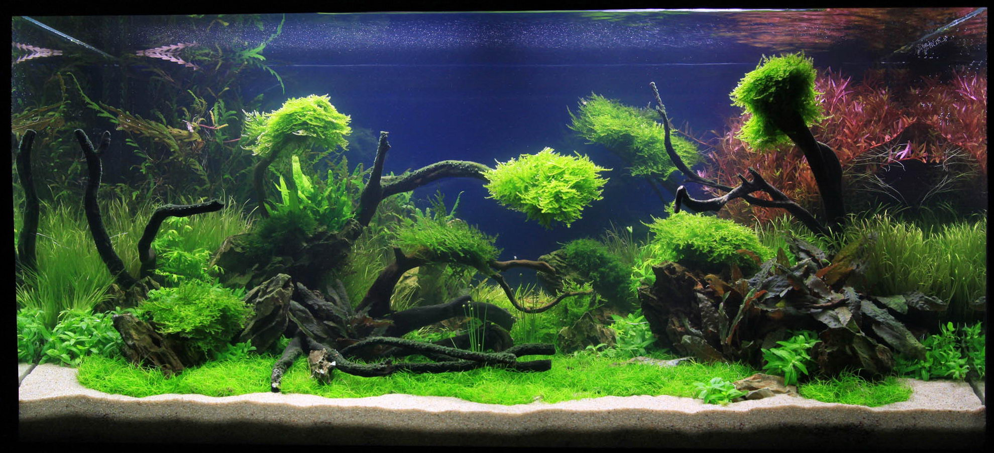Aquarium Green Design