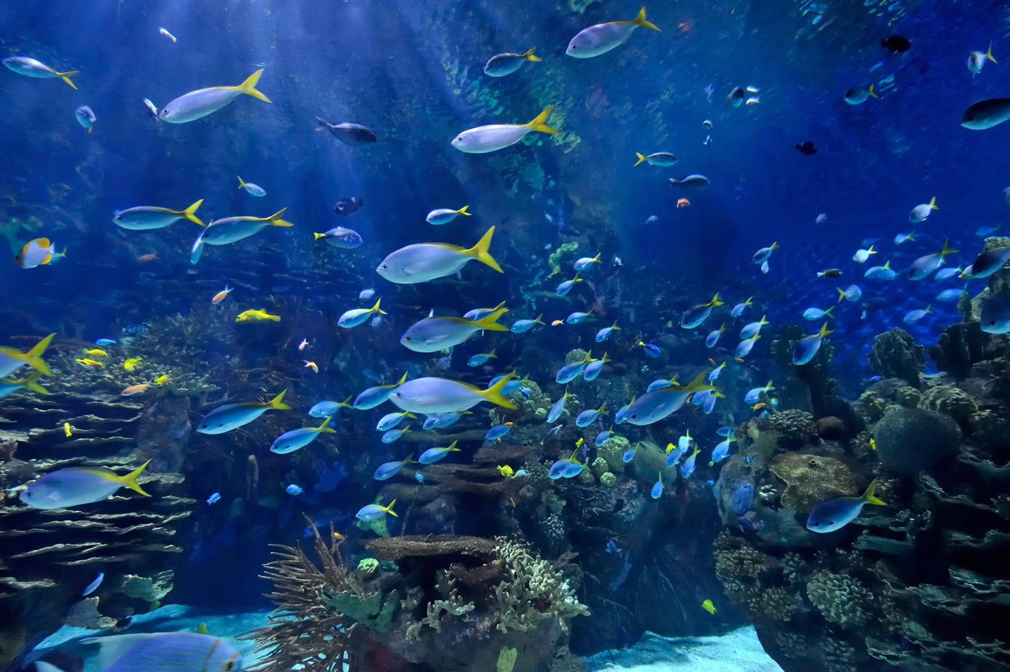 Aquarium Fish in a Flock 872.38 Kb