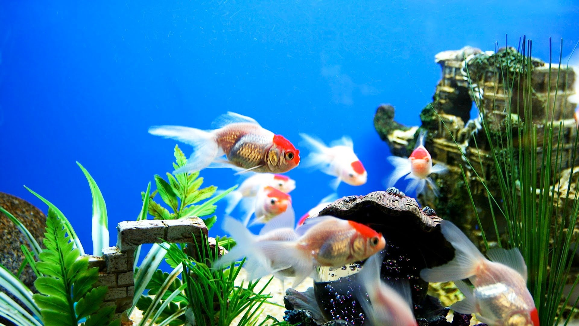 Aquarium Decorations for Fishes 872.38 Kb