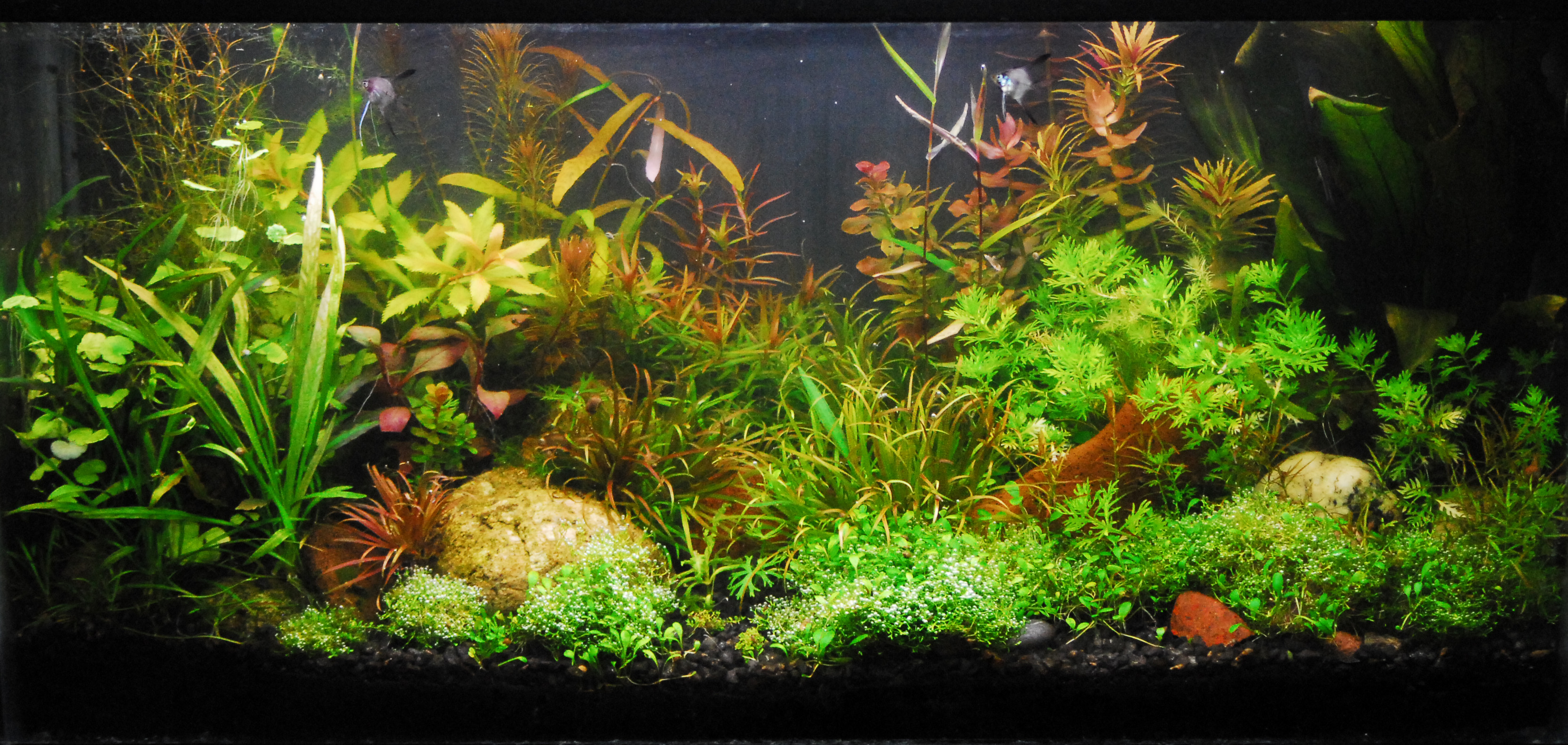 Aquarium Plants Decorations