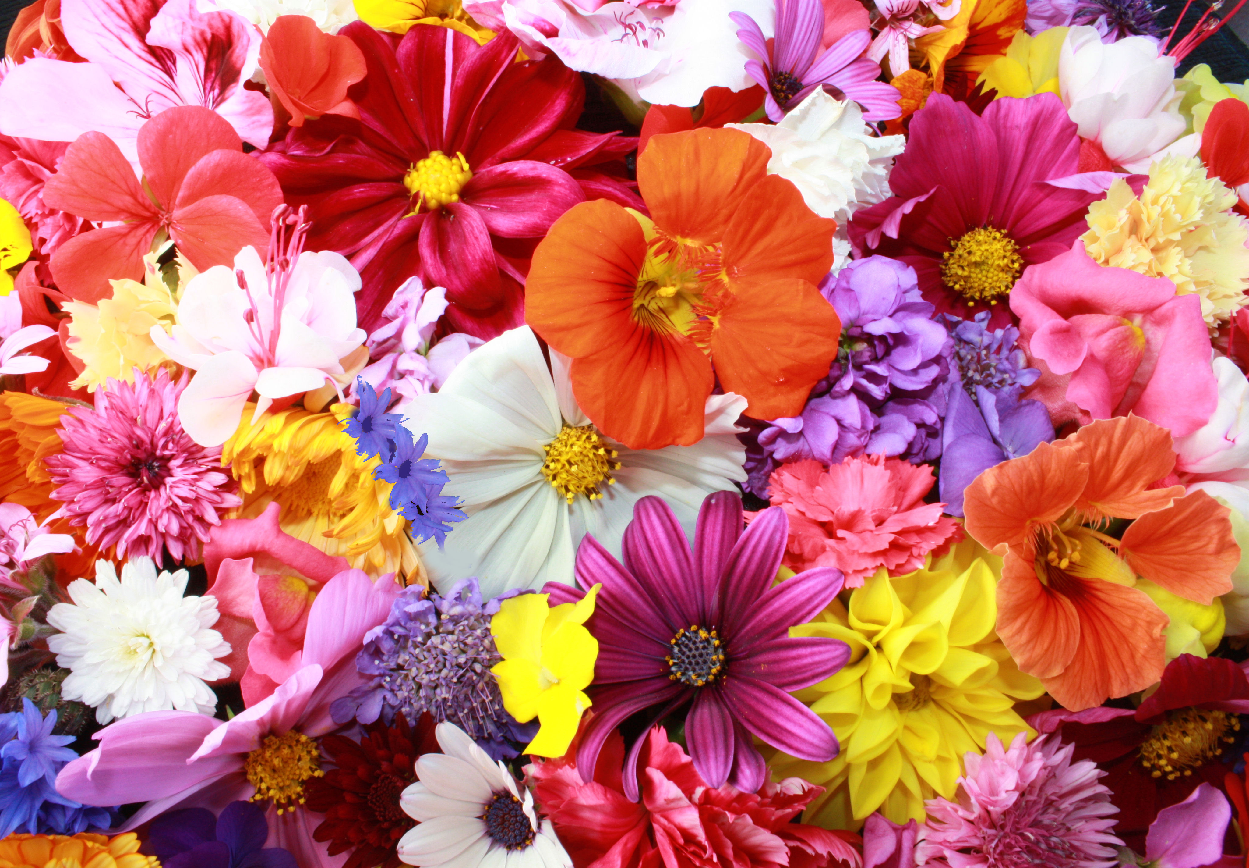 Variety of Bright Flowers 100.02 Kb