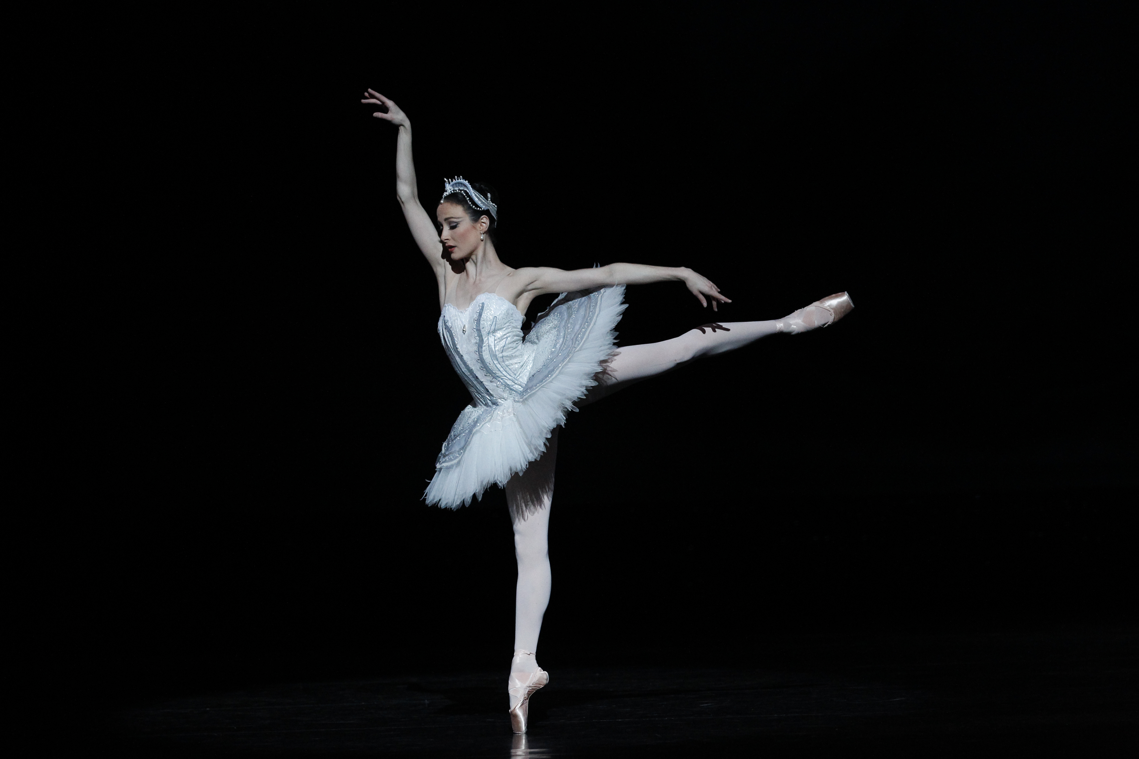 White Swan in a Ballet Dance 122.95 Kb
