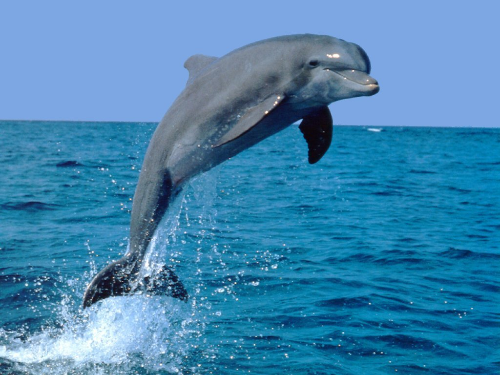 Dolphin Jumping over Water