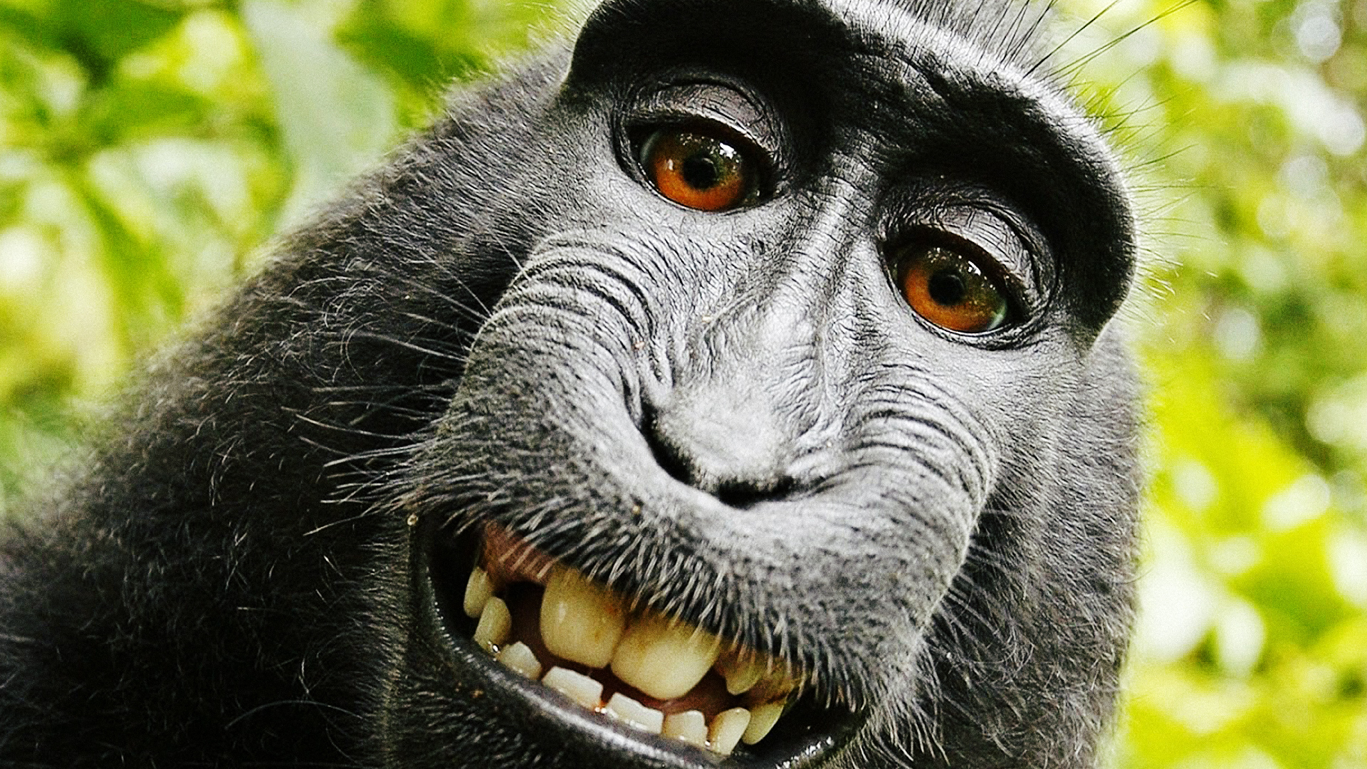 Monkey Funny Smile
