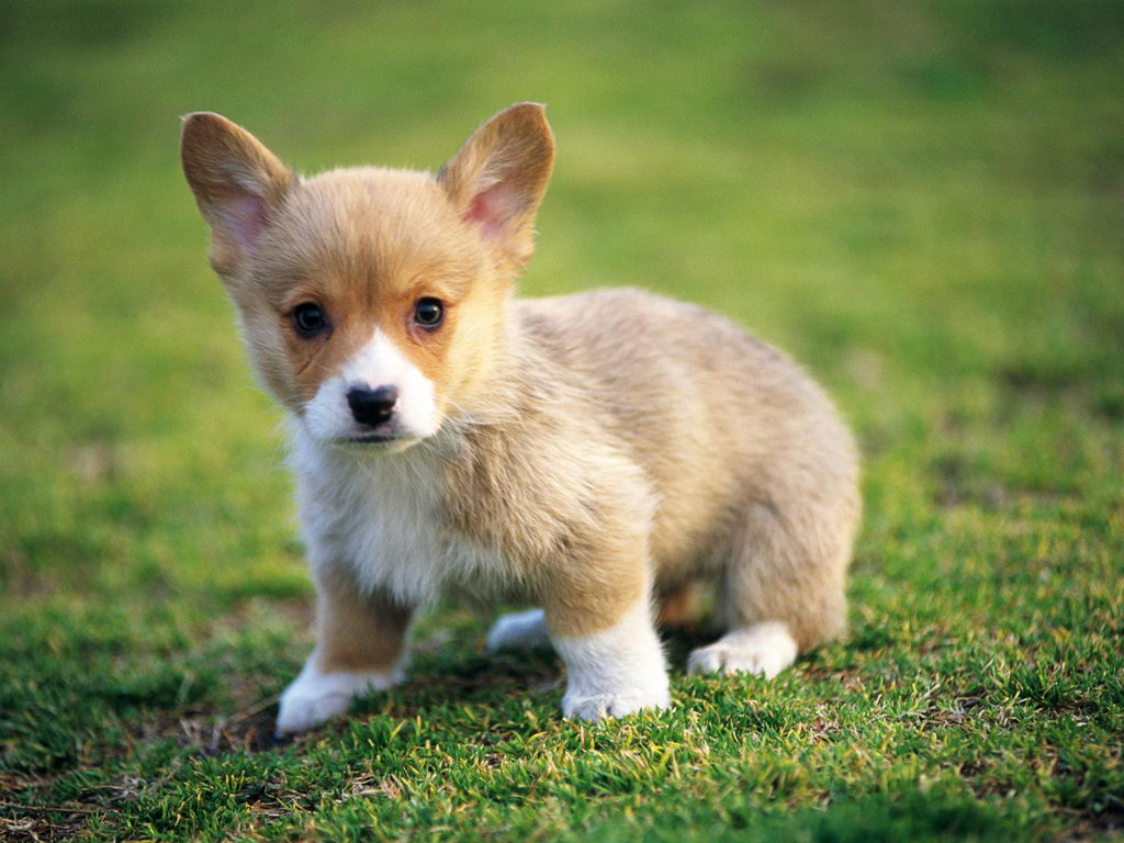 Cute Animals, Puppy Wallpaper 71.47 Kb