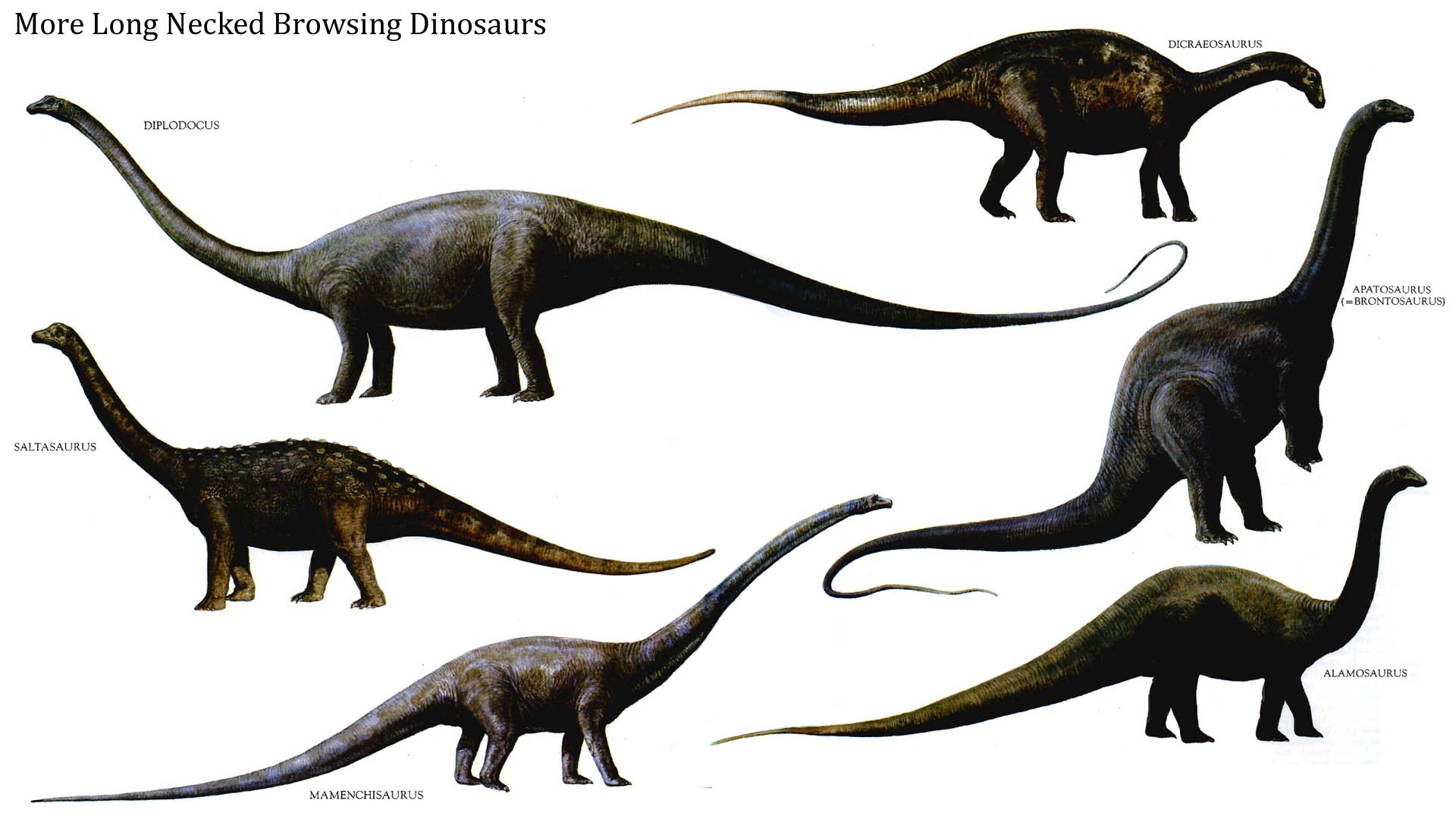 Long Necked Browsing Dinosaurs