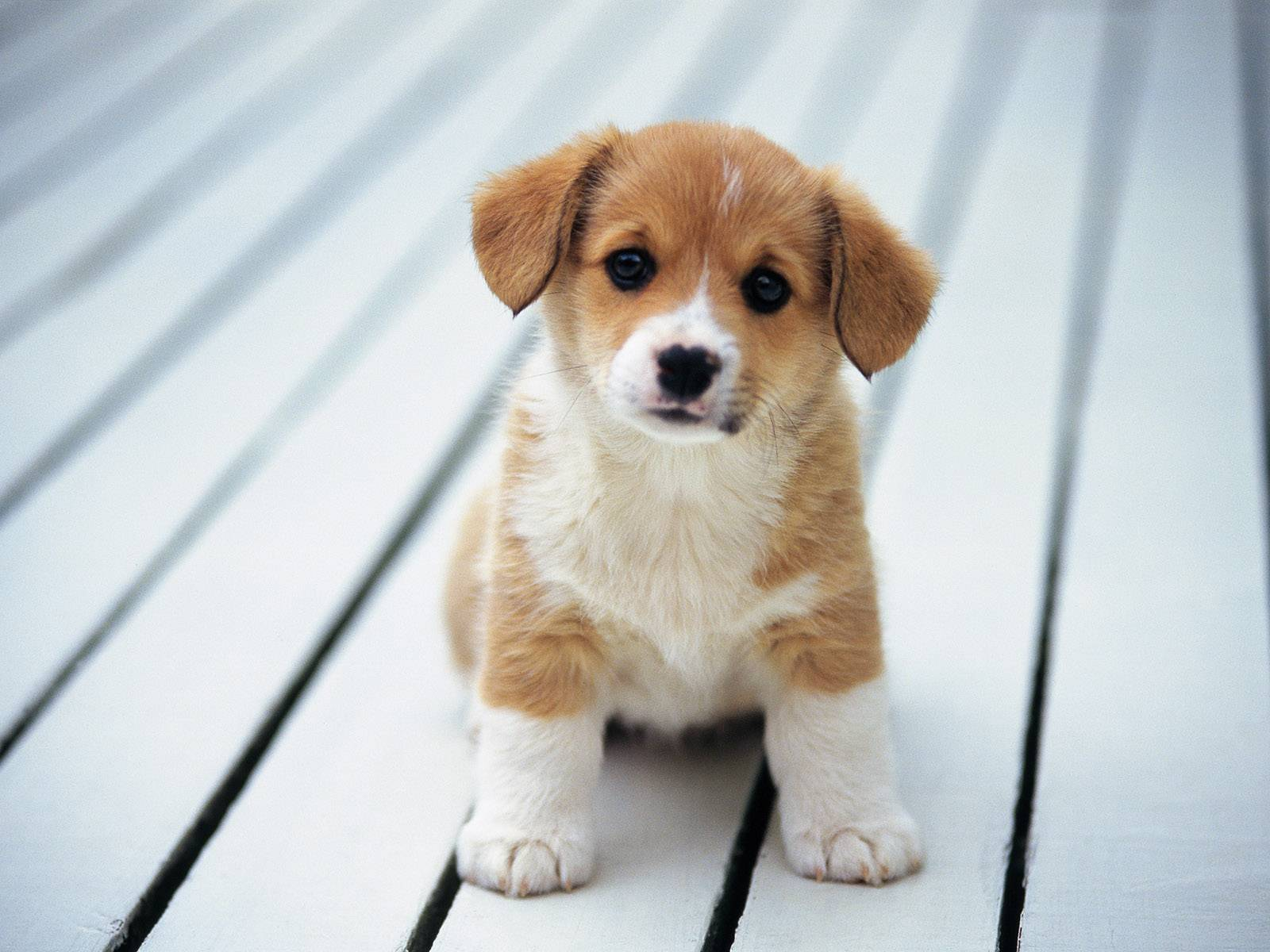 Cute Small Dog