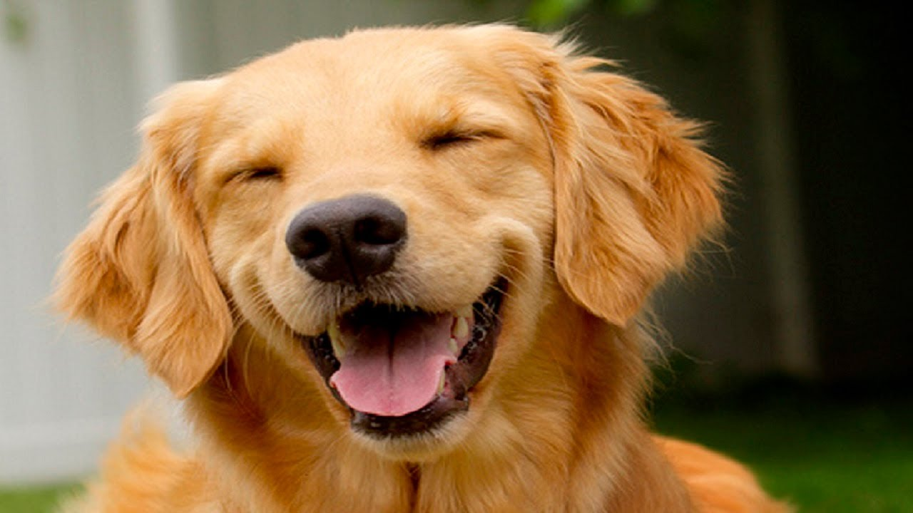 Dog Cheerful Smile