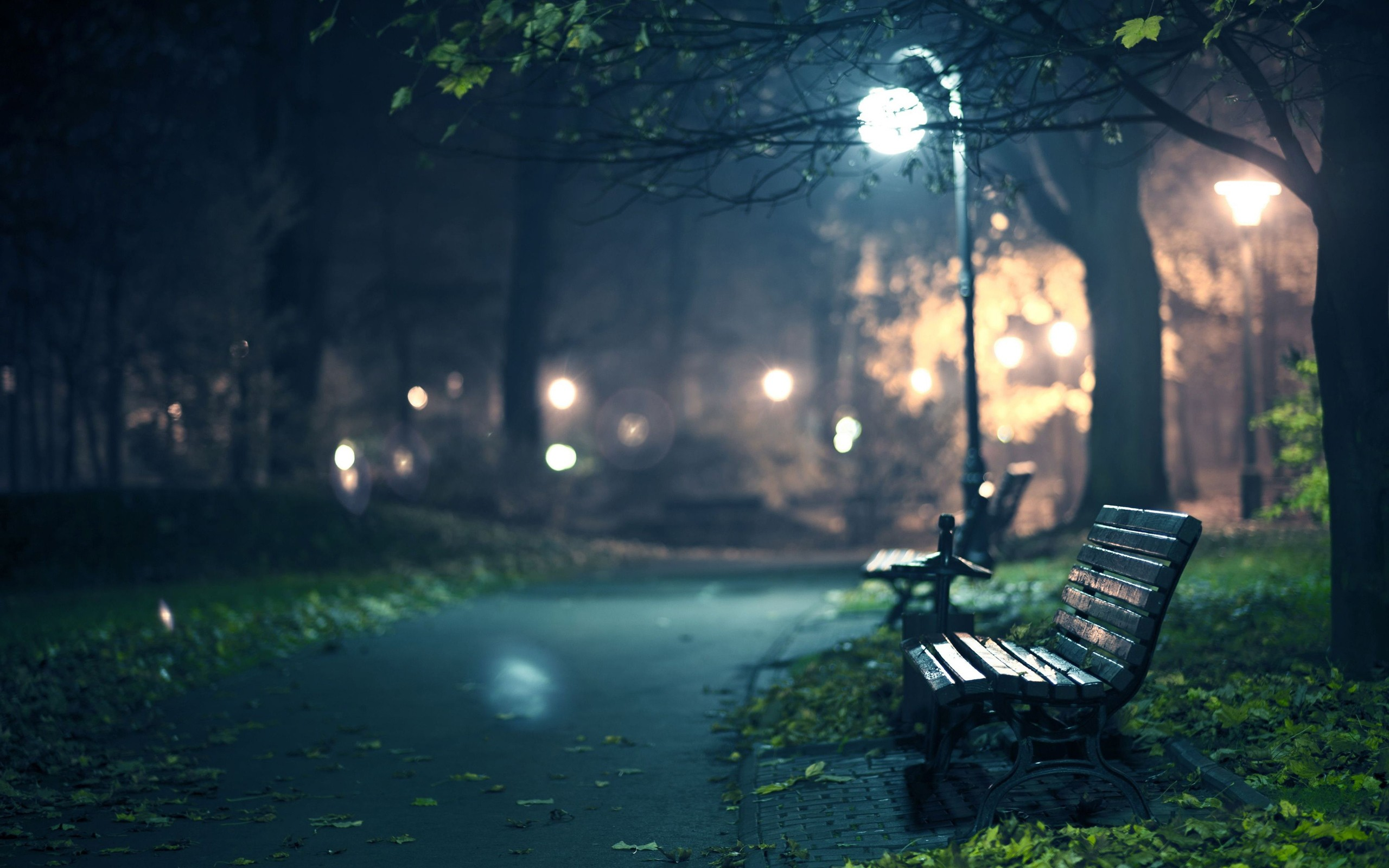 Night Lights in a Park