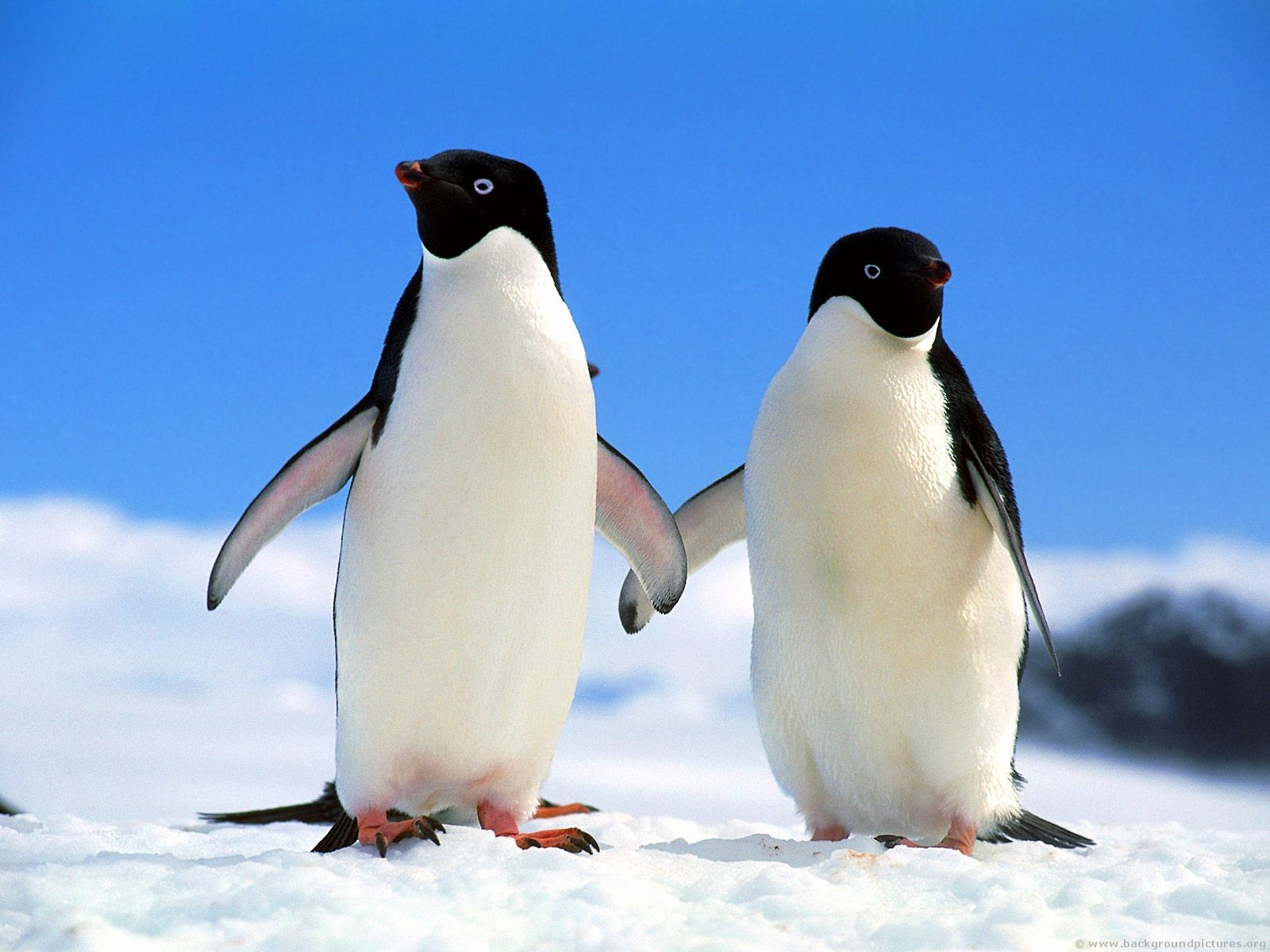 Penguin Couple Holding Hands