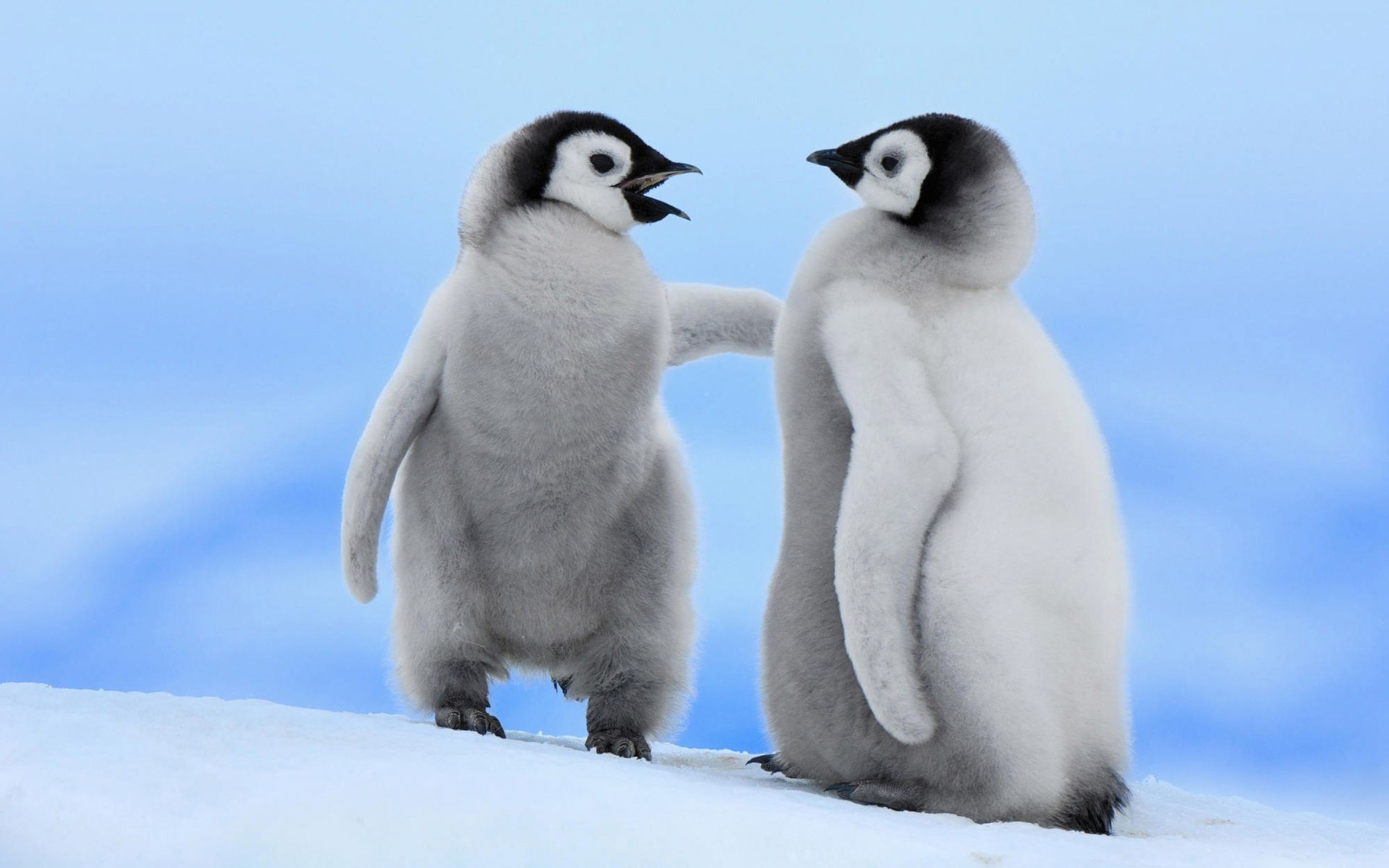 Cute Baby Penguin Couple