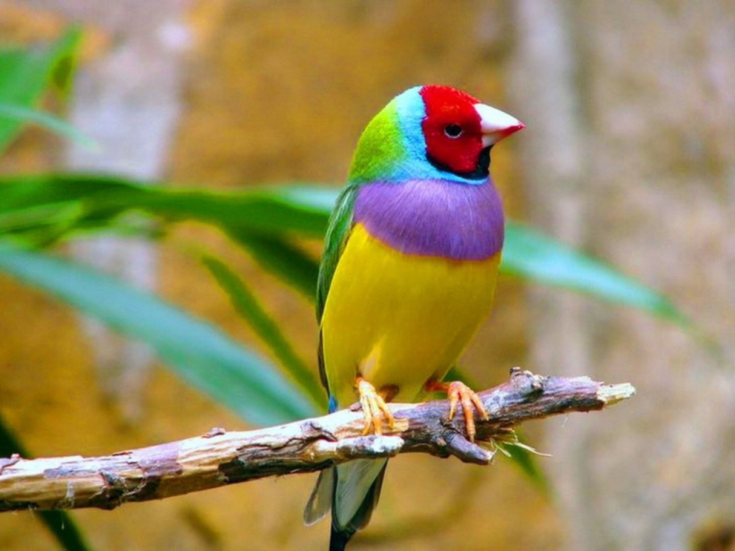 Bright Tropical Bird