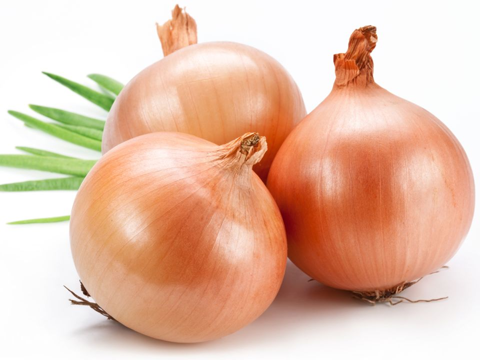 Common Onion Picture 195.88 Kb