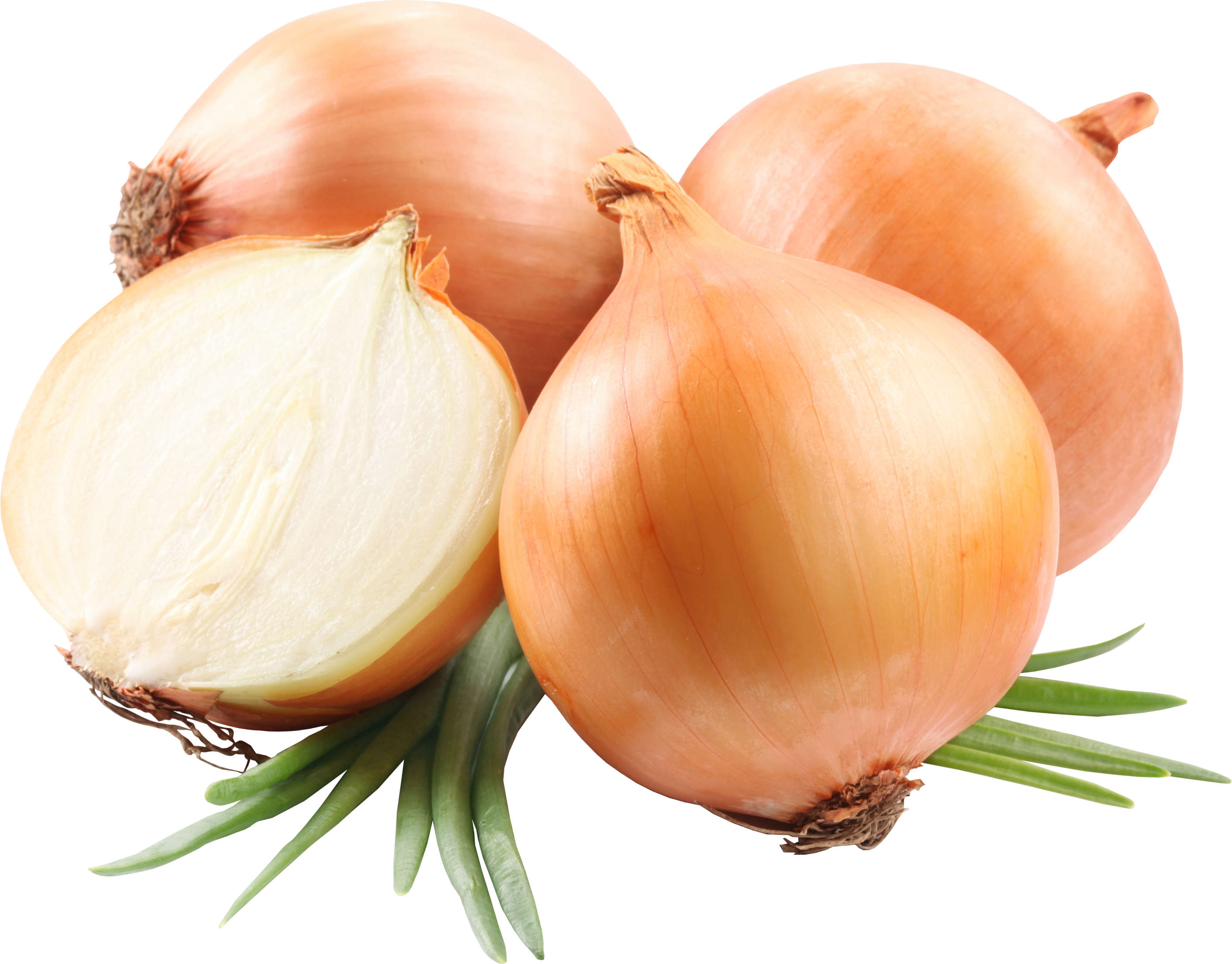 Fresh Onion Vegetable 195.88 Kb