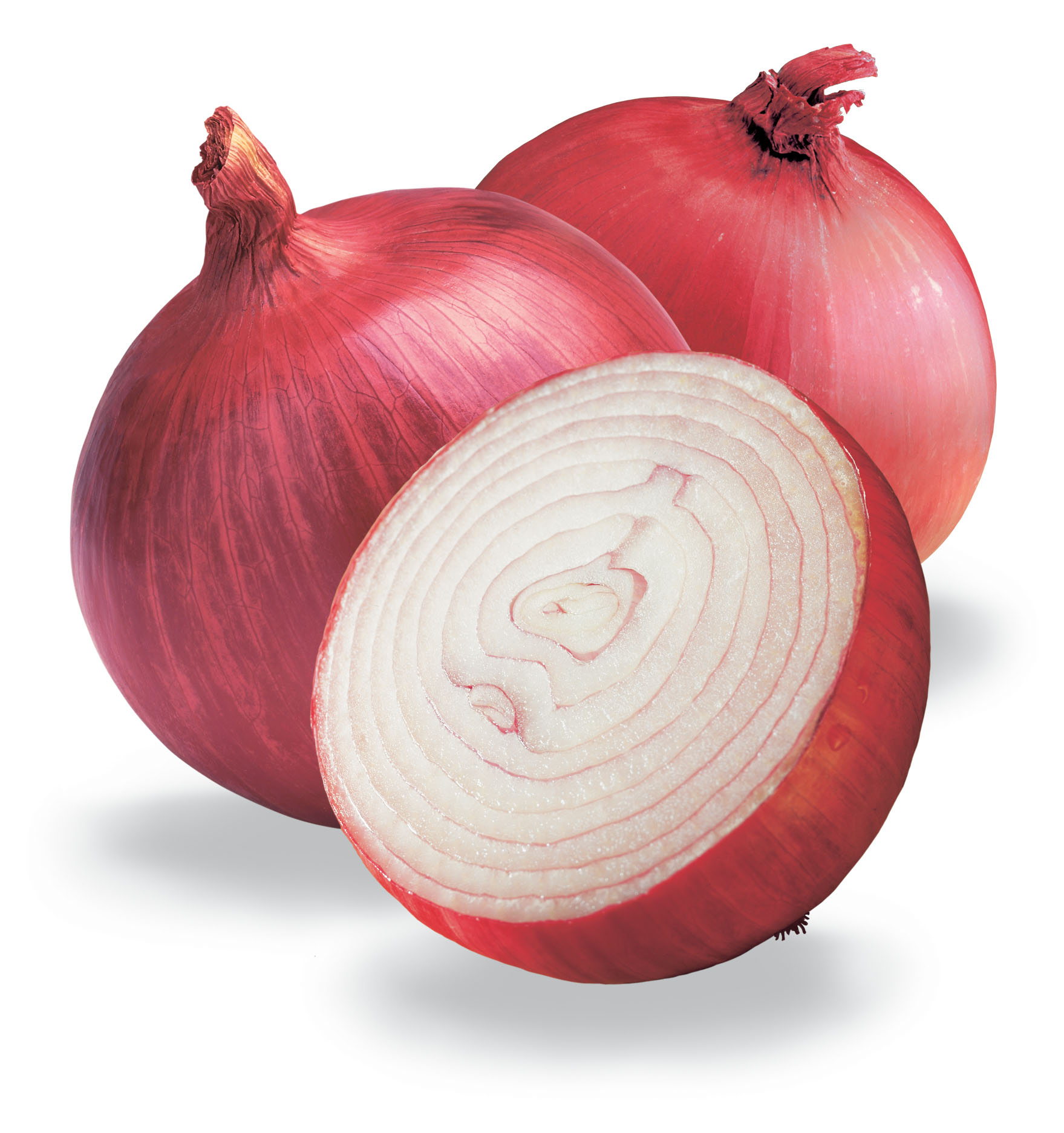 Raw Onion in Section