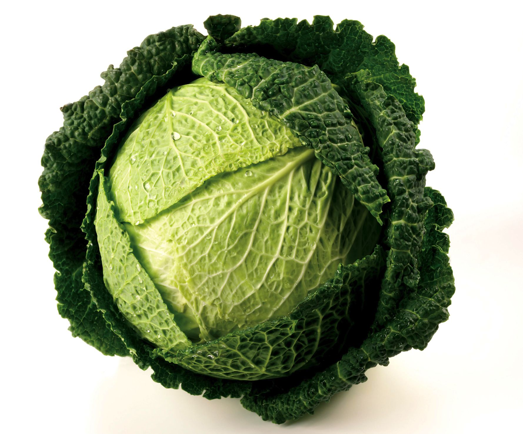 Unusual Cabbage Kind 243.66 Kb