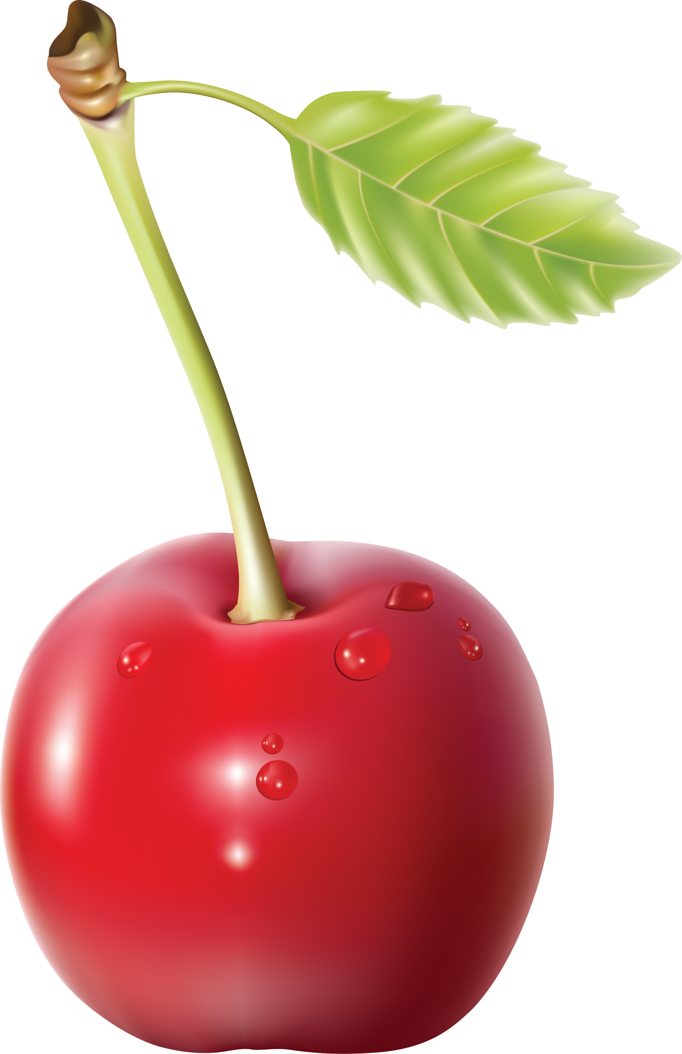 Drawn Cherry with Water Drops 2264.96 Kb