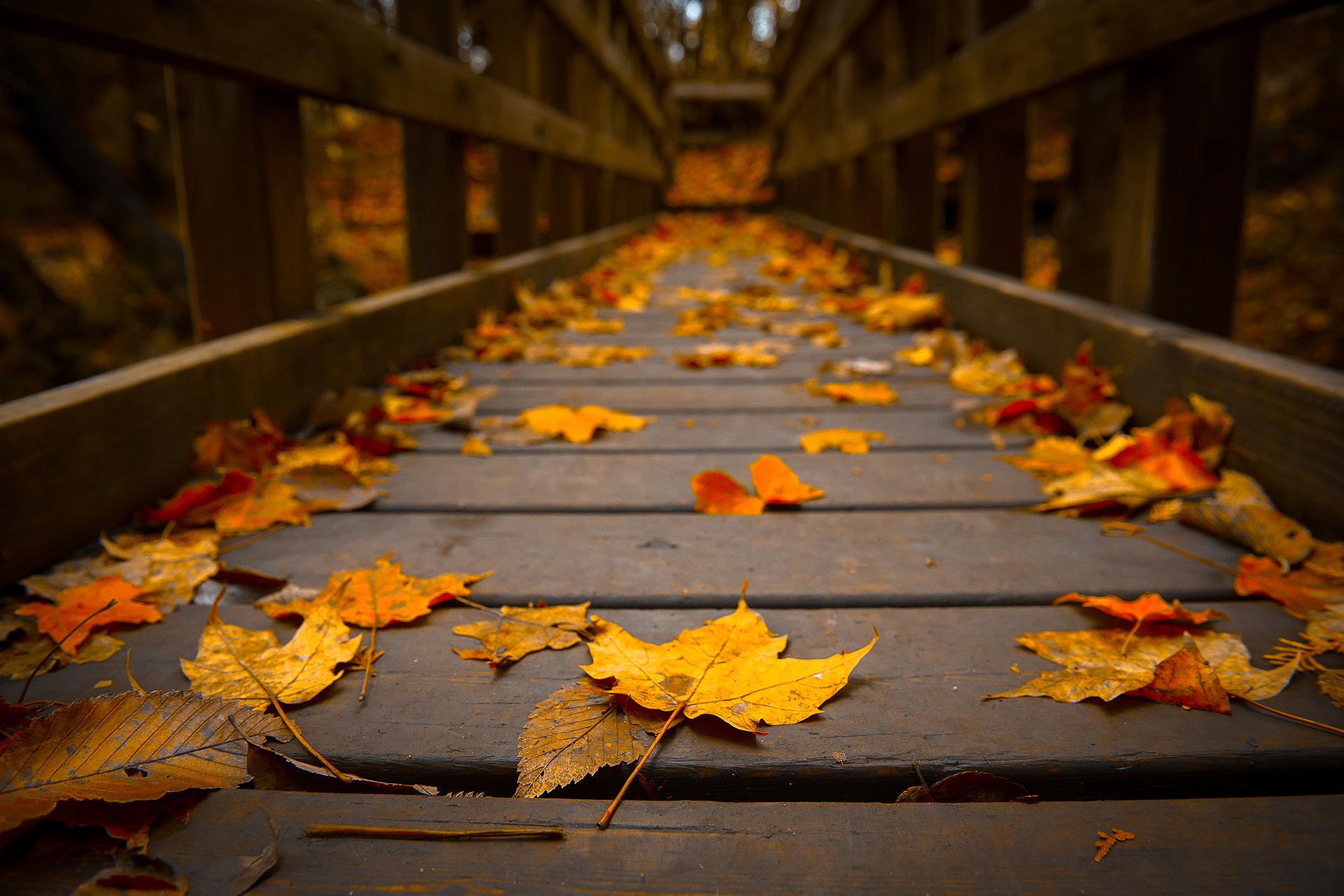 Autumn Leaves on a Bridge 947.94 Kb