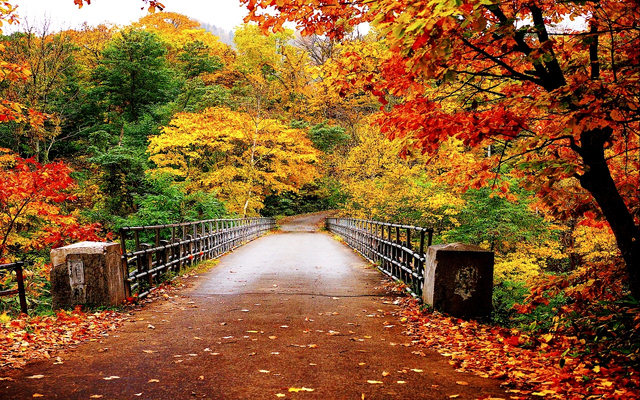 Bridge Through Autumn Park 947.94 Kb