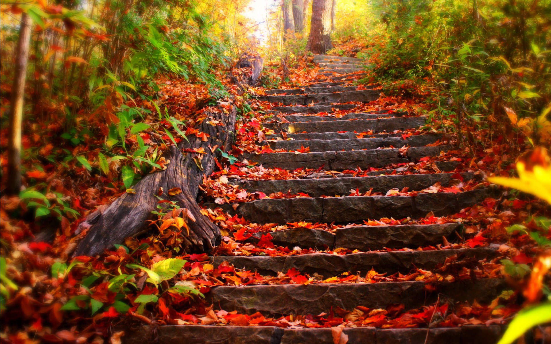 Autumn Leaves at Stone Stairs 415.97 Kb