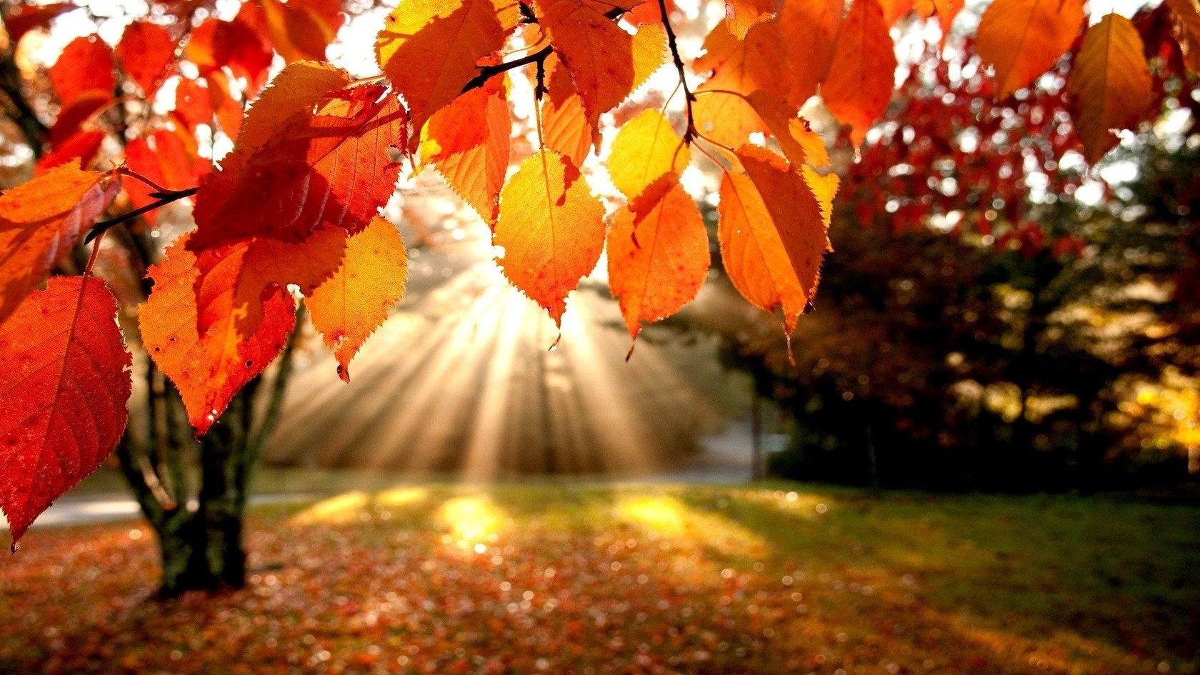 http://all4desktop.com/data_images/original/4245382-autumn.jpg