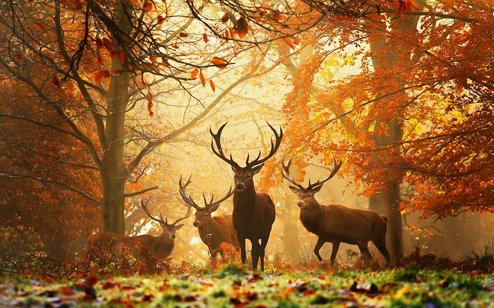 Deers in Autumn Forest