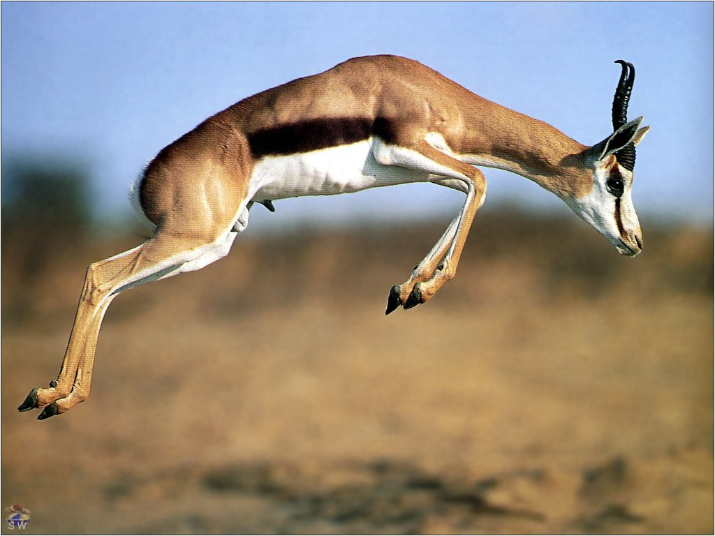 Gazelle High Jump 1225.31 Kb