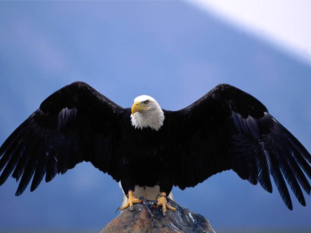 Eagle with Spread Wings 795.83 Kb