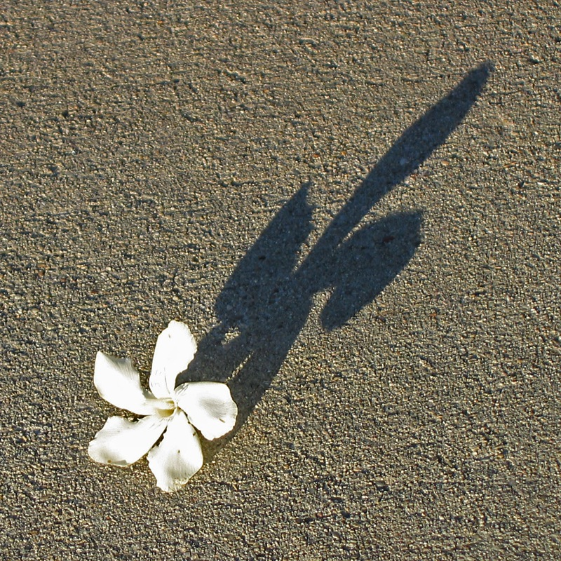 Shadow from Flower on the Ground 454.03 Kb