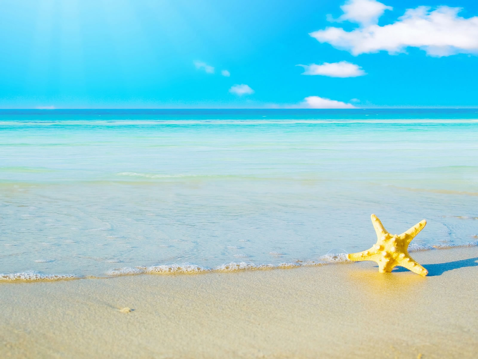 Sea Star on a Beach 218.48 Kb