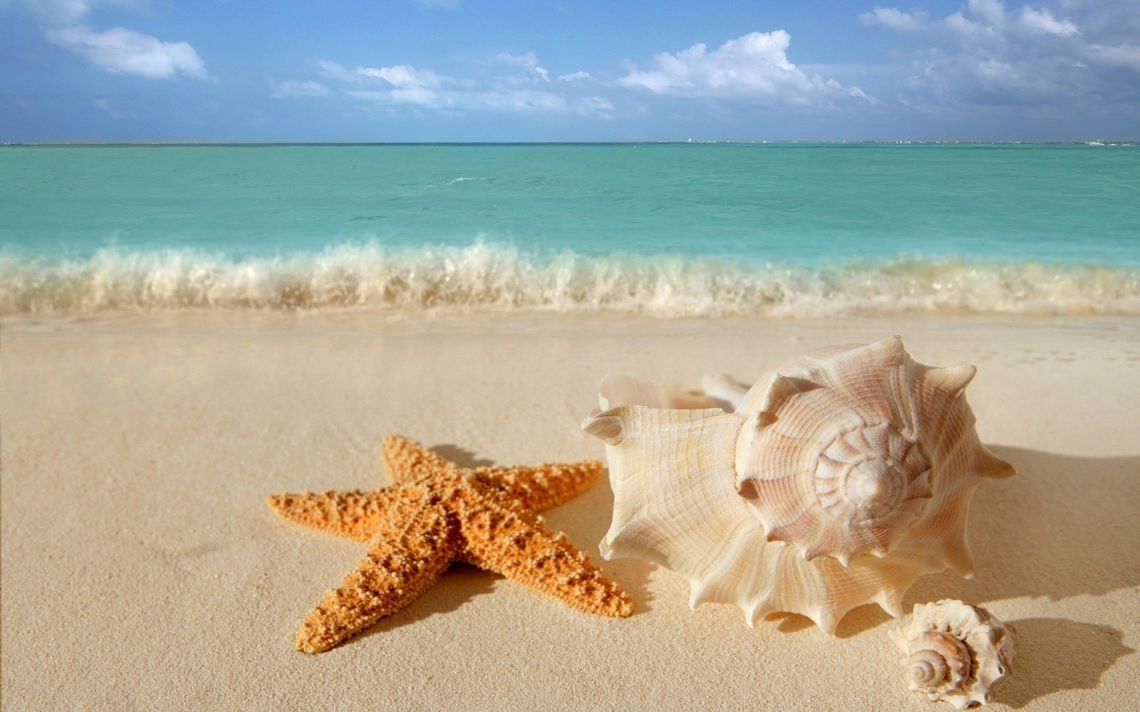 Sea Shells on a Beach